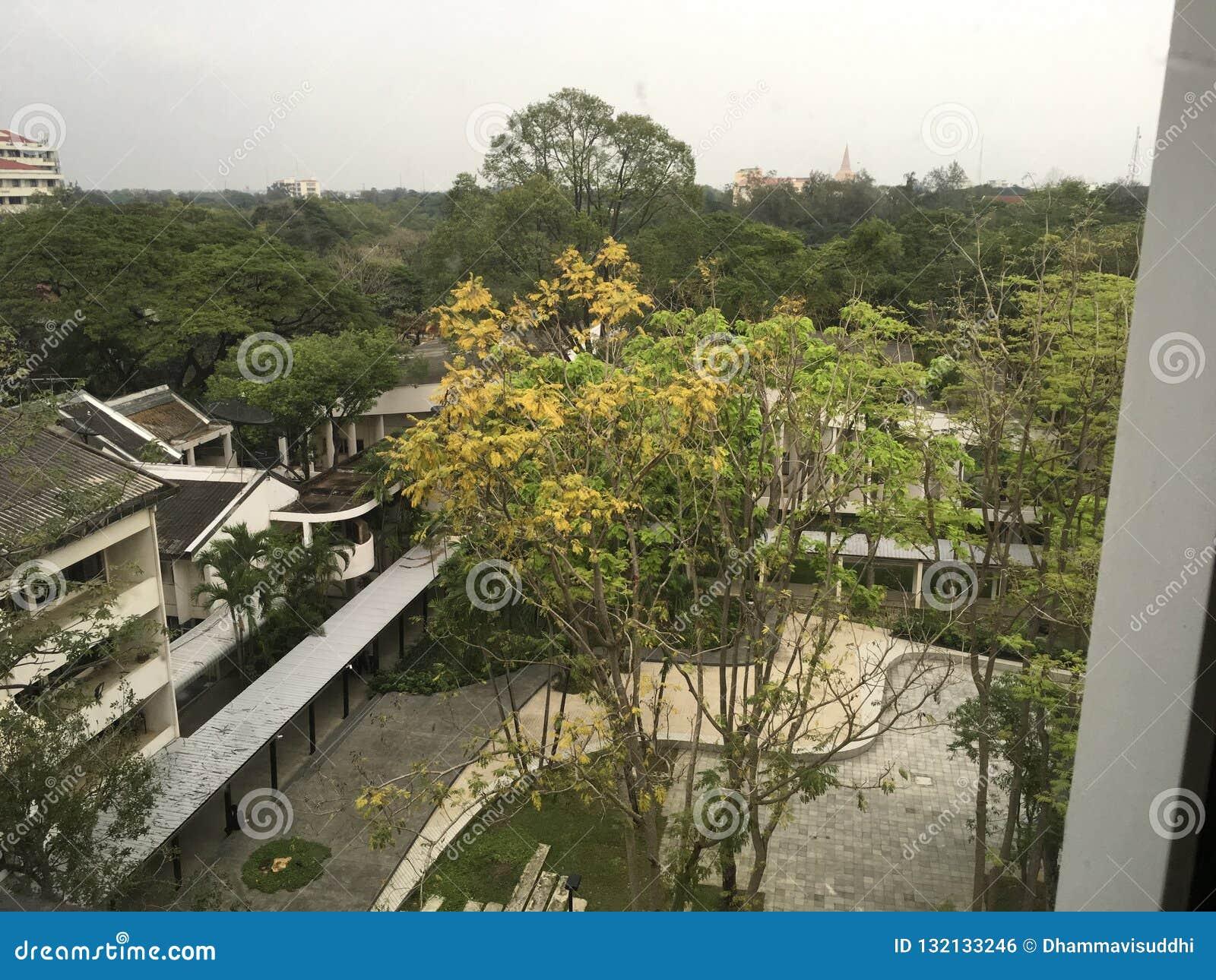 Άσπρα κτίρια γραφείων ανάμεσα στα τροπικά πράσινα δέντρα