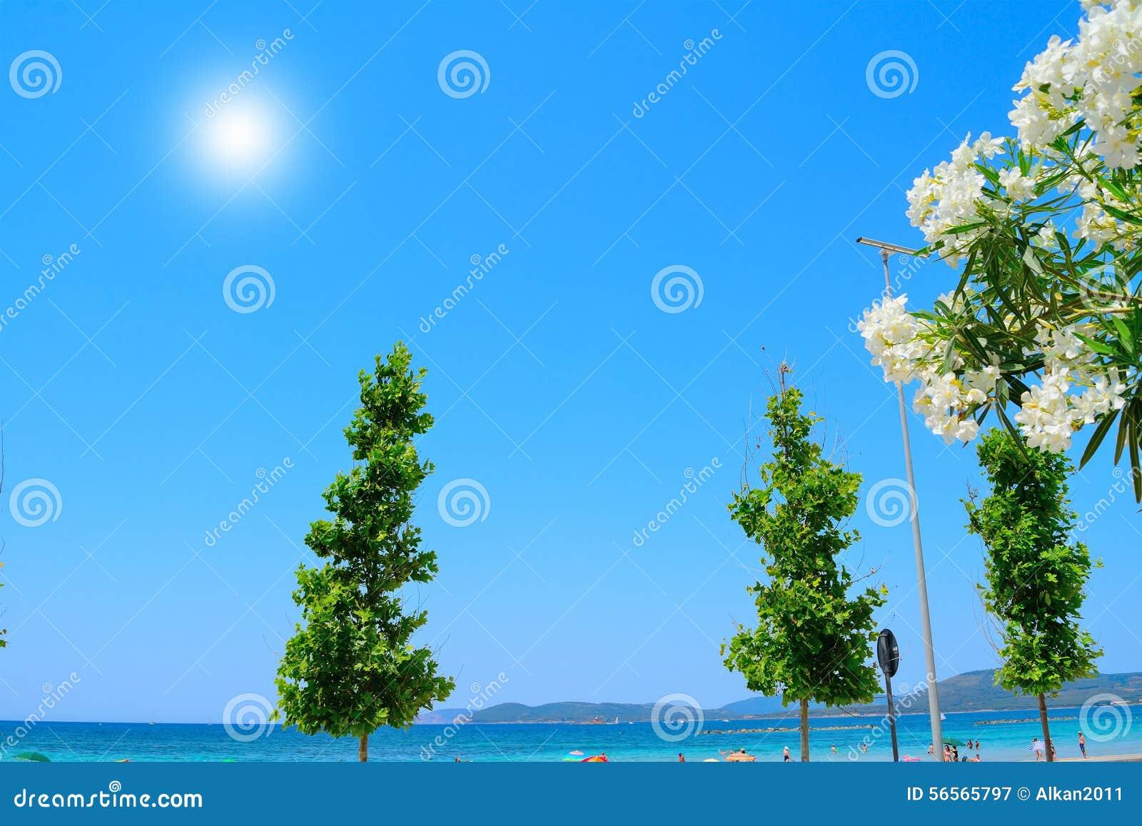 Download Άσπρα Oleanders και άλλες εγκαταστάσεις από την ακτή Στοκ Εικόνα - εικόνα από oleander, παραλία: 56565797