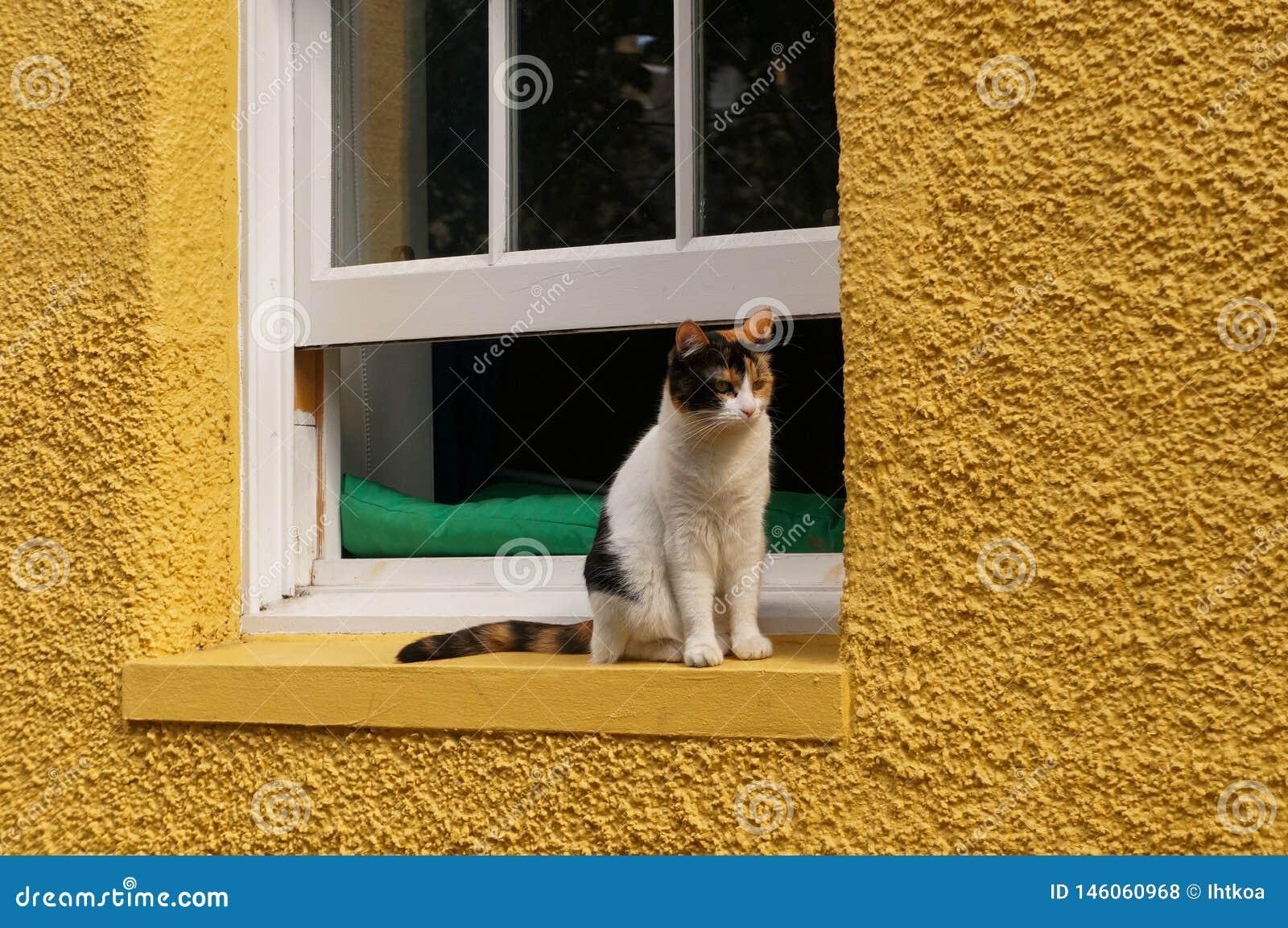 Άσπρη γάτα μπροστά από το παράθυρο
