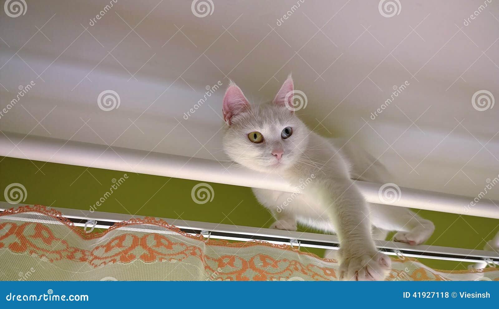 Άσπρη γάτα στη ράβδο κουρτινών