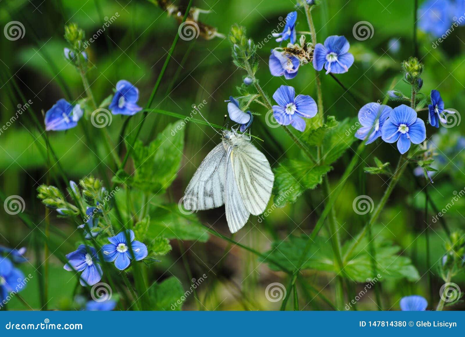 Άσπρη πεταλούδα σε ένα λουλούδι