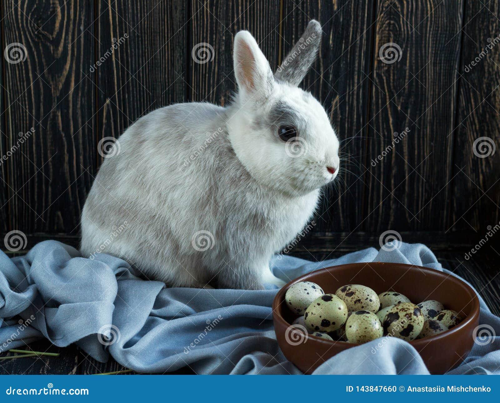 Άσπρος-γκρίζα συνεδρίαση κουνελιών κοντά στα αυγά ορτυκιών σε ένα σκοτεινό ξύλινο υπόβαθρο Ημέρα Πάσχας