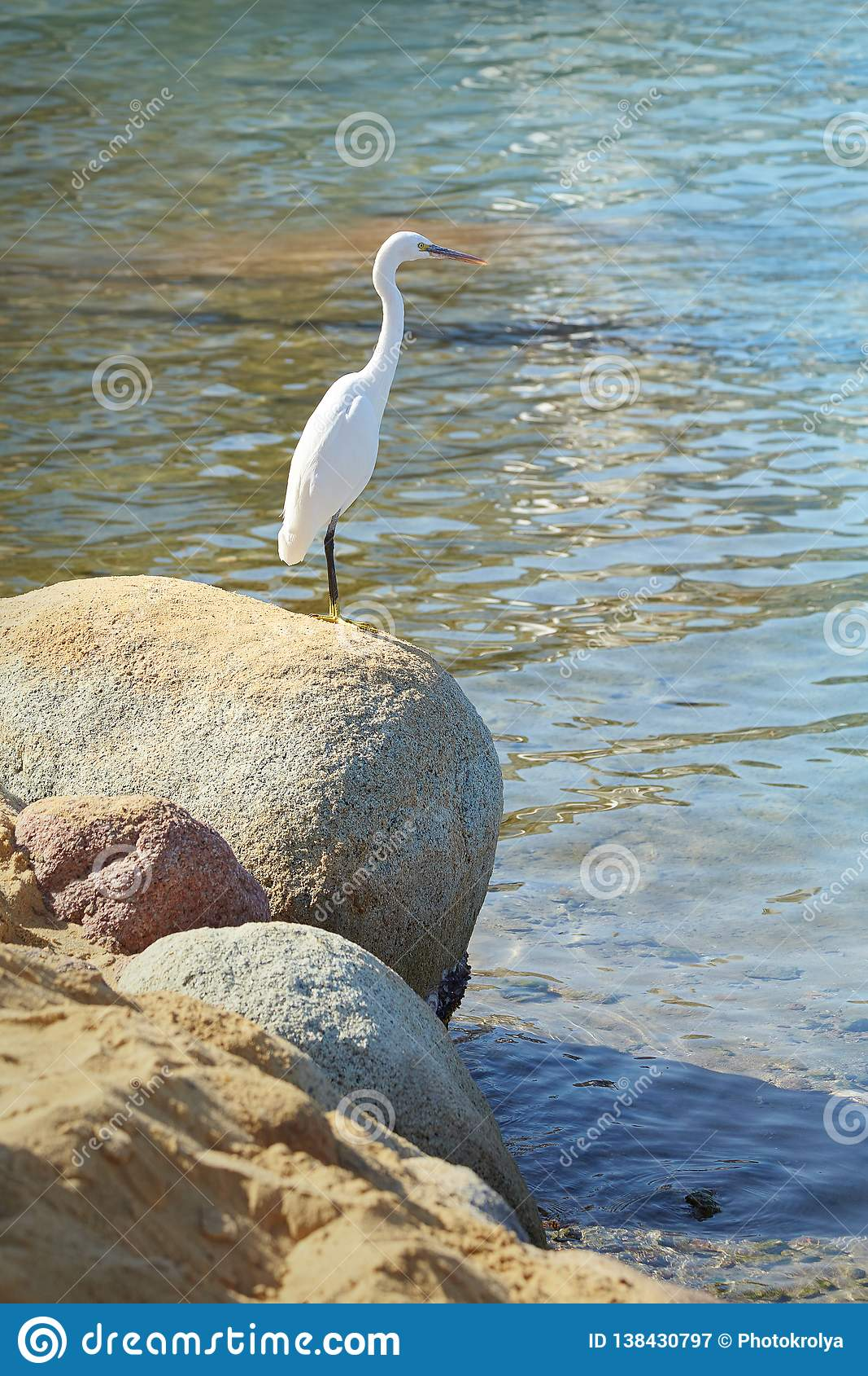 Άσπρος ερωδιός στην πέτρα σε μια ακροθαλασσιά