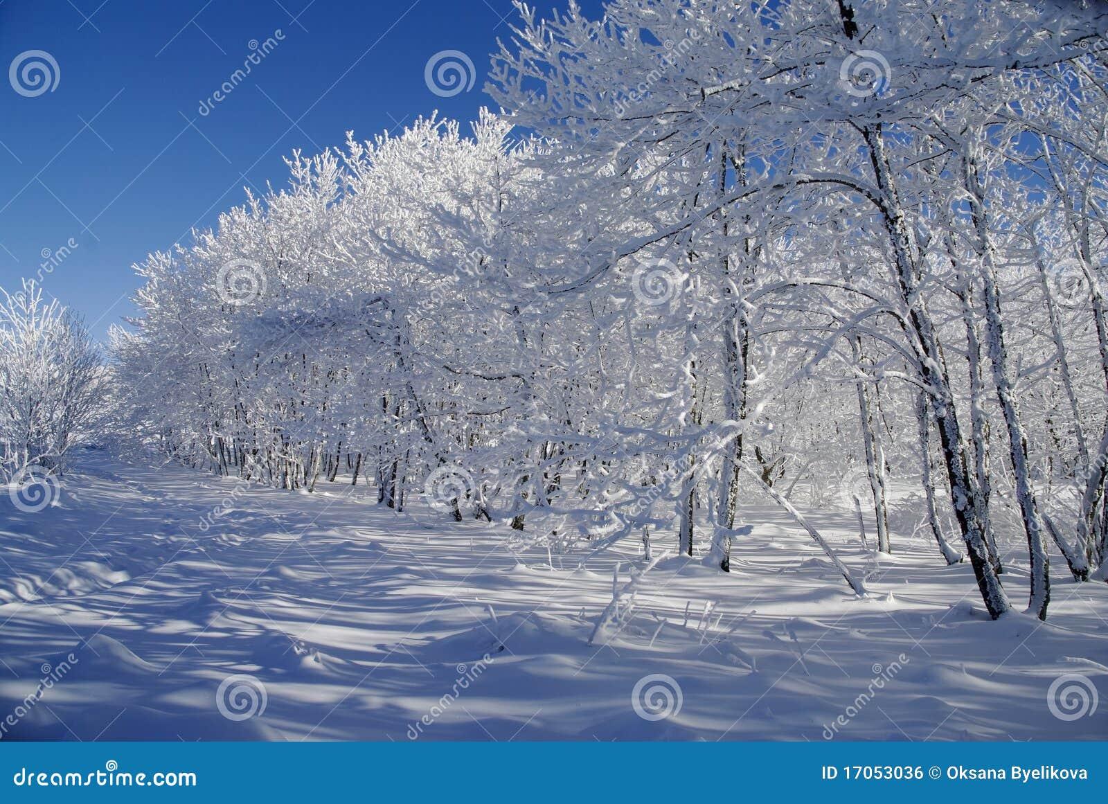 άσπρος χειμώνας τοπίων
