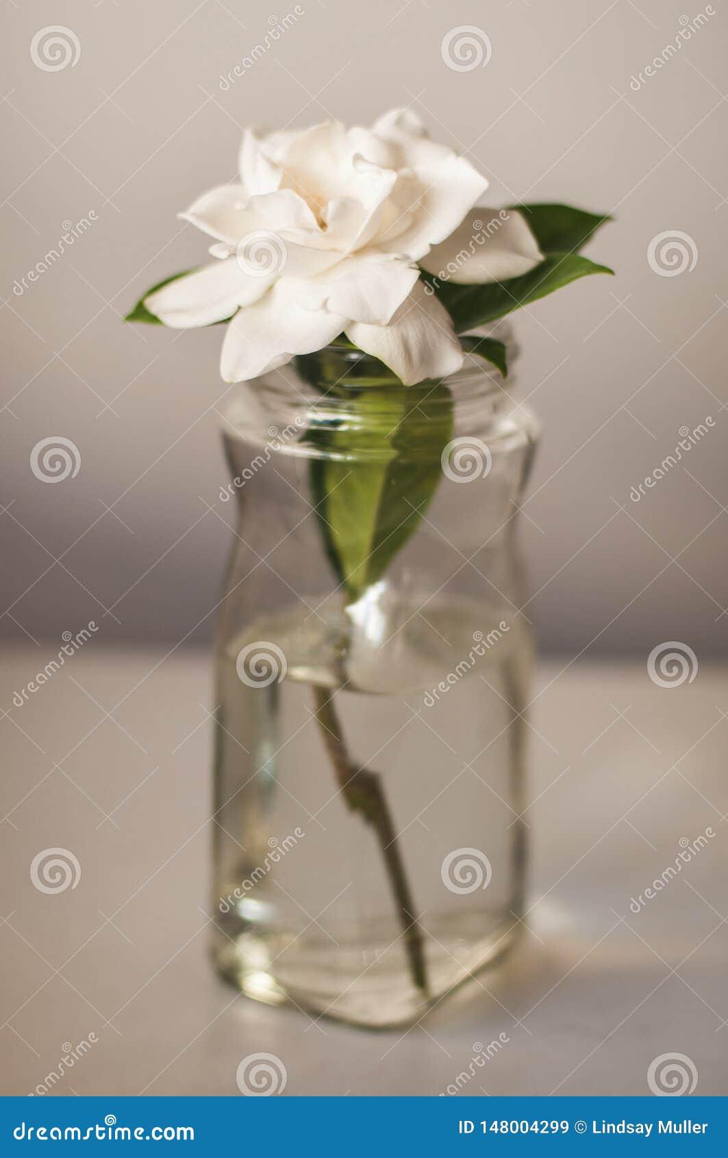 Άσπρο λουλούδι Magnolia στο βάζο γυαλιού