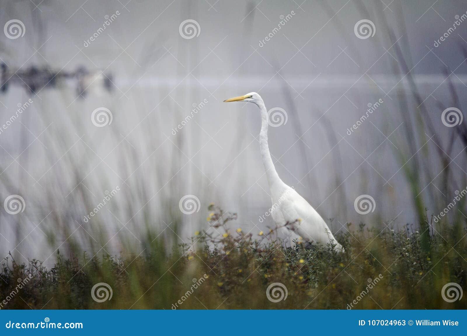 Www μεγάλο πουλί com