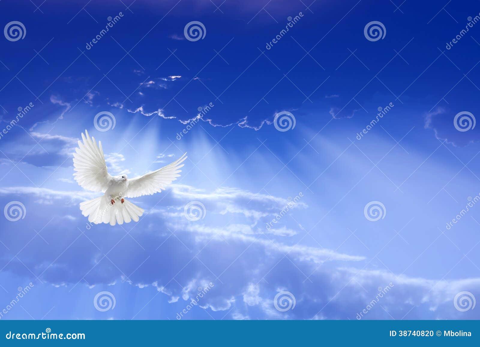 Άσπρο περιστέρι που πετά στον ουρανό