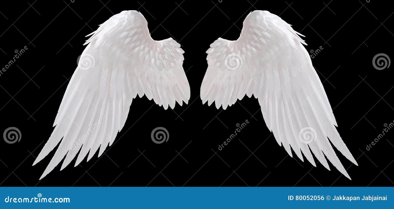Άσπρο φτερό αγγέλου