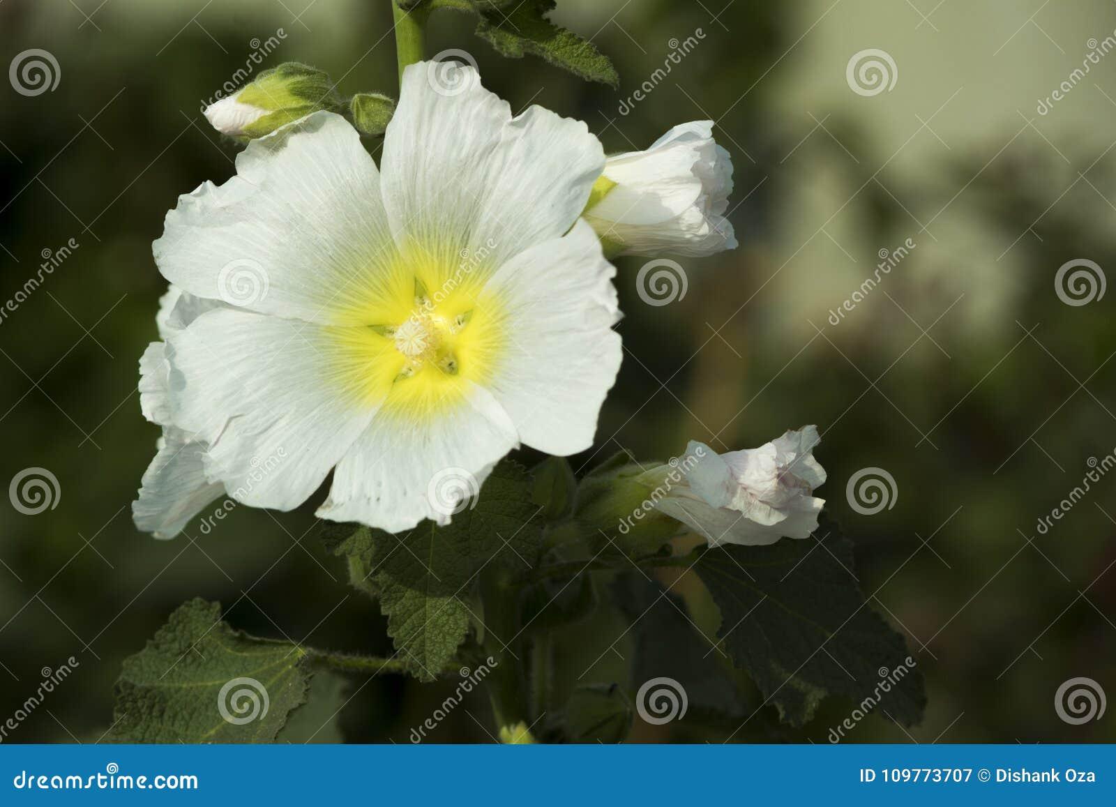άσπρο όμορφο ελατήριο φύλλων λουλουδιών πράσινο