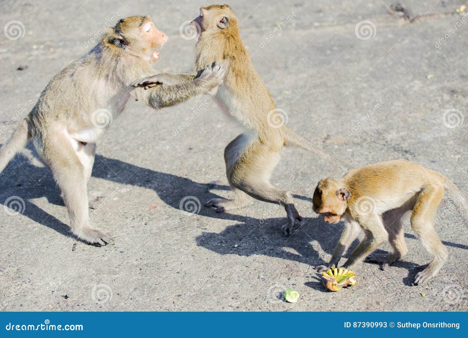Άτακτος πίθηκος 4