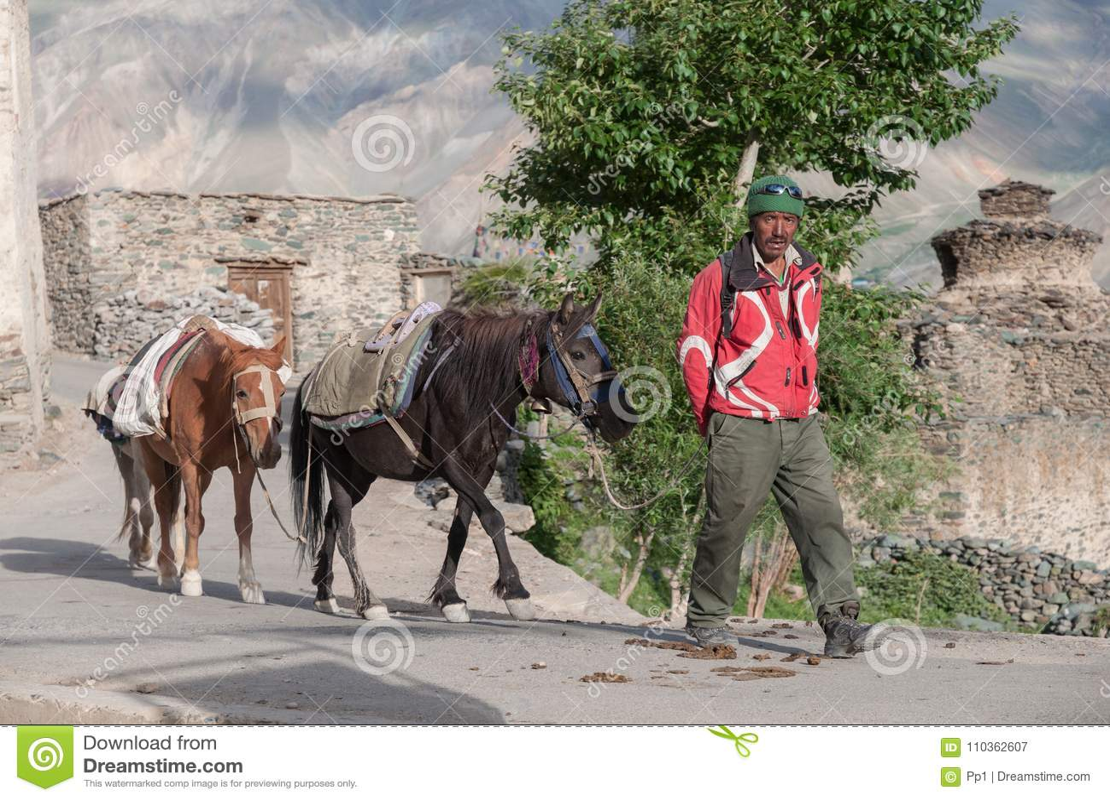 Άτομο με τα άλογα, χωρικός στην περιοχή βουνών Ladakh Ινδία