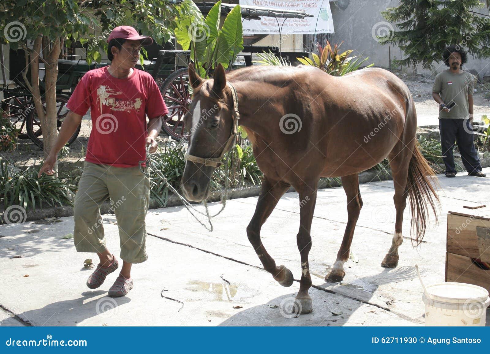 Άλογα και χειριστής αλόγων σόλο