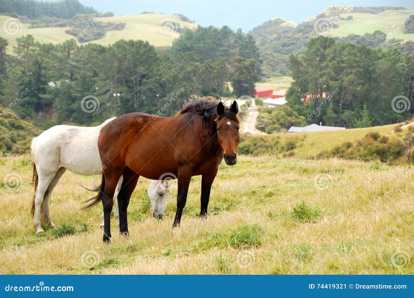 Άλογα, τοπίο