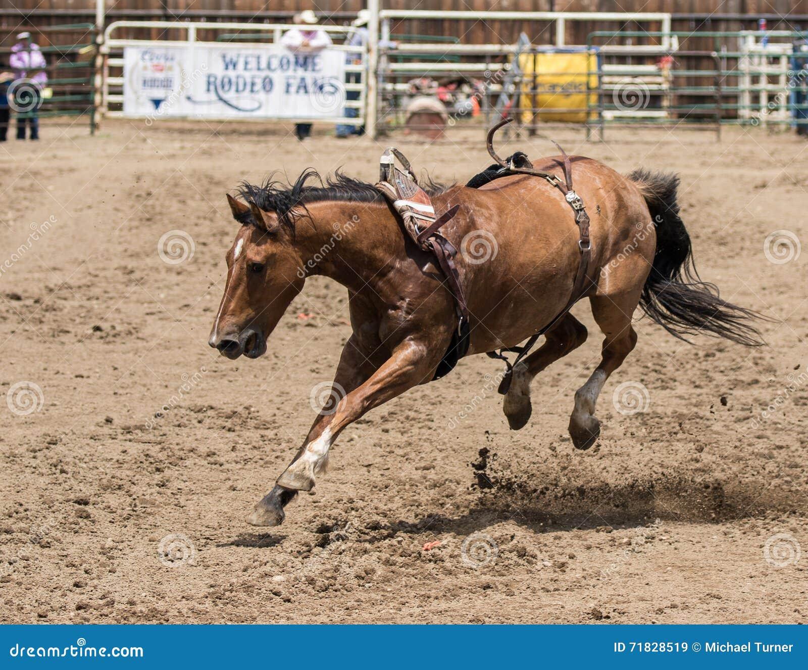 Άλογο στο χαλαρό