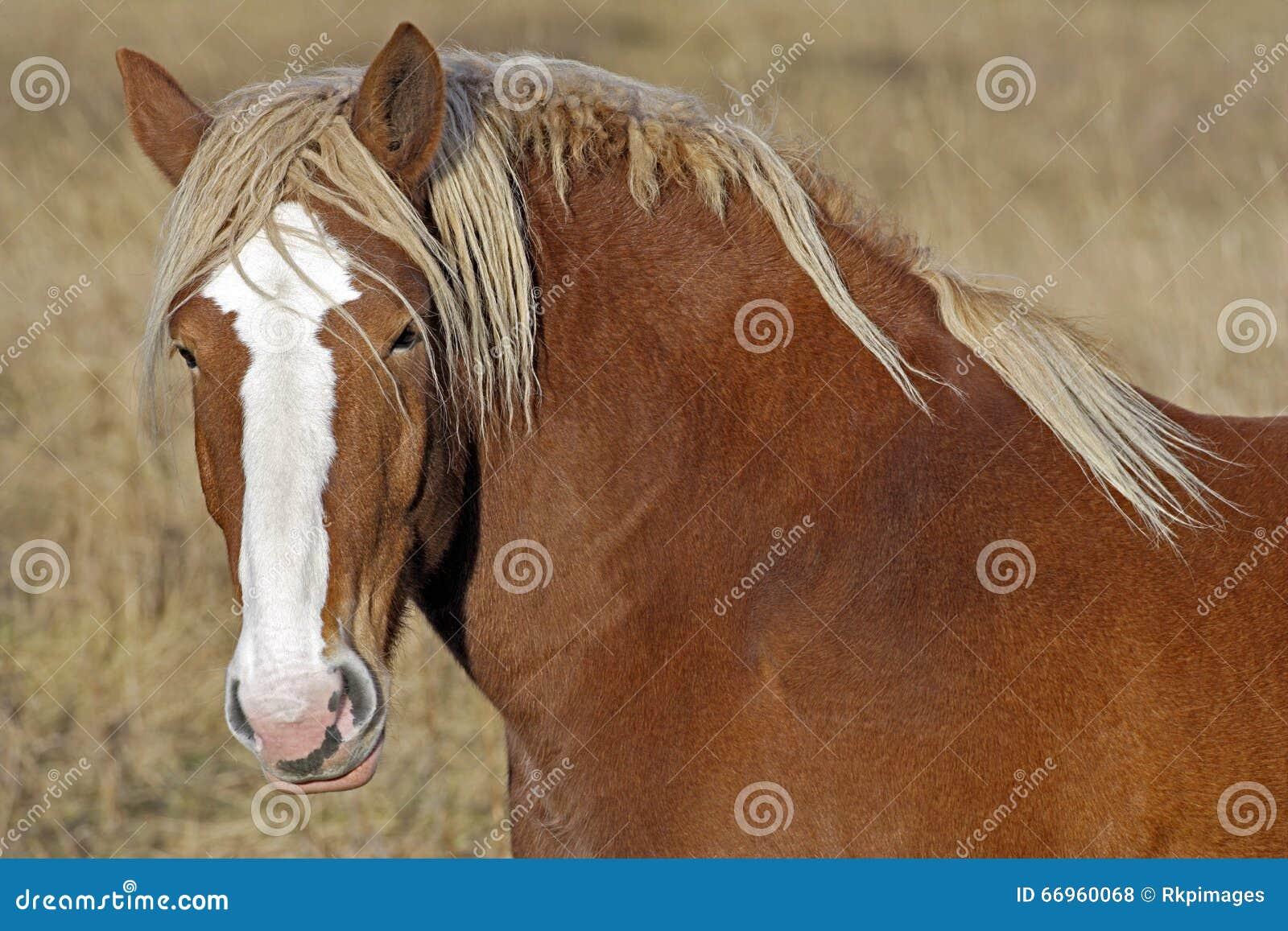 Άλογο σχεδίων στο λιβάδι