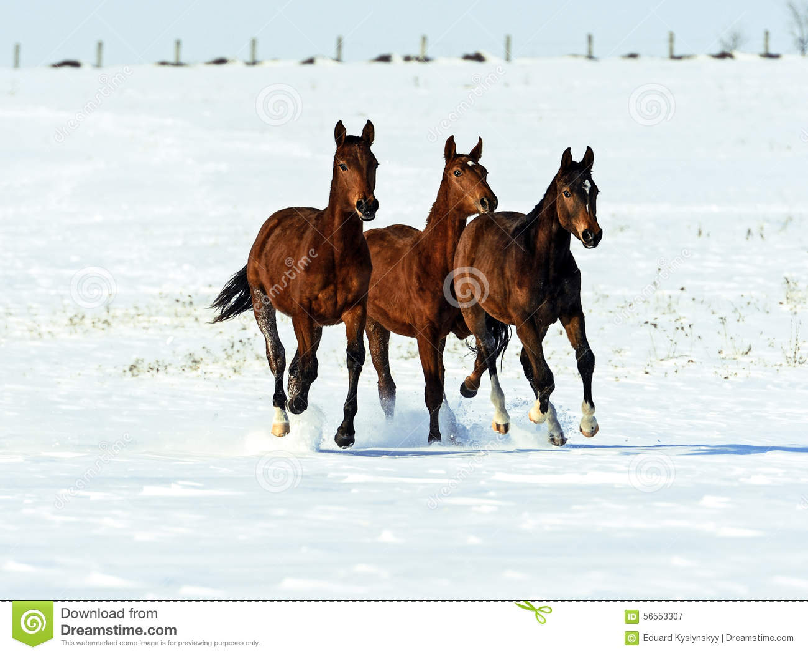 Download Άλογο στοκ εικόνα. εικόνα από πλανήτης, ungulates, έδαφος - 56553307