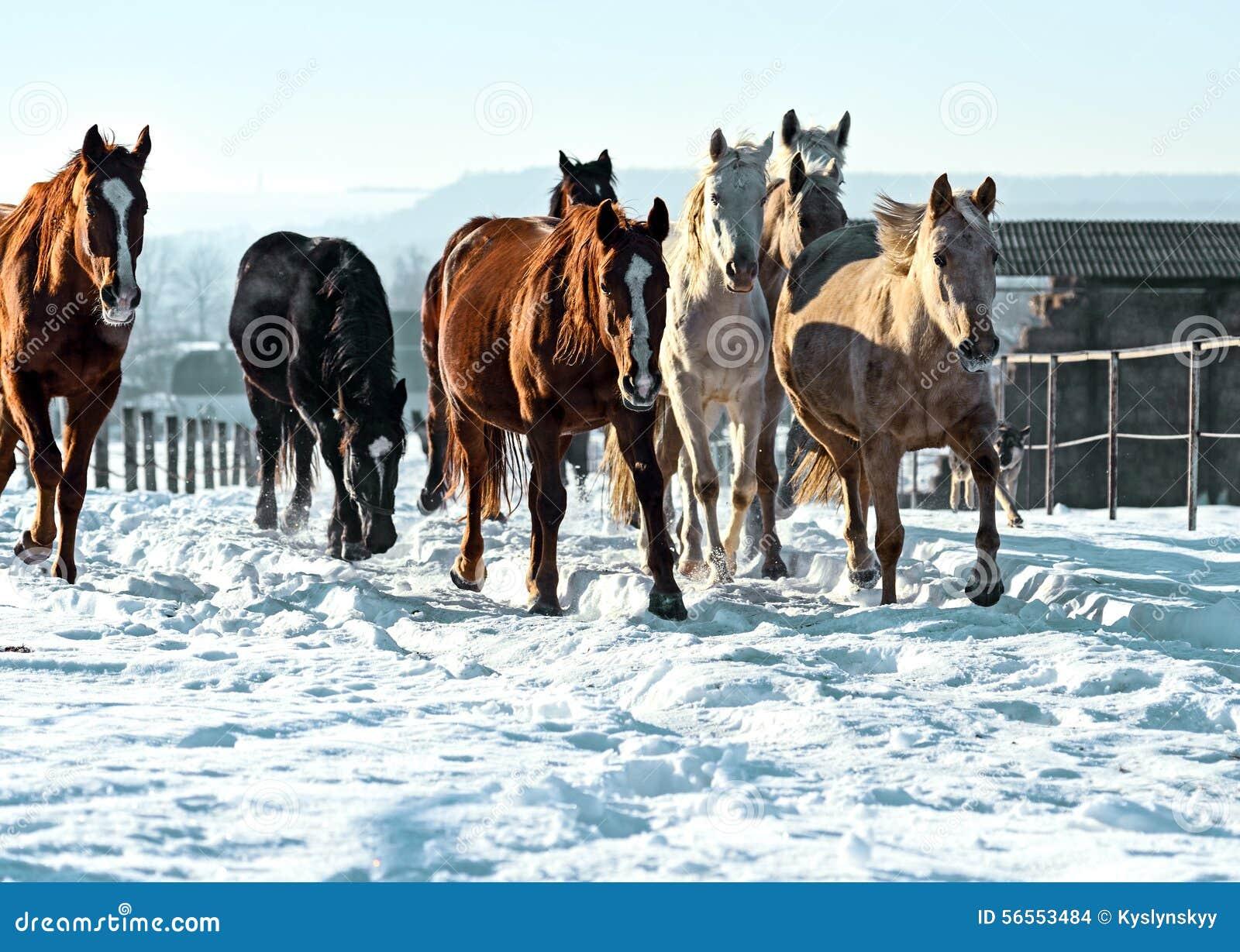 Download Άλογο στοκ εικόνες. εικόνα από άλογο, wildlife, ungulates - 56553484