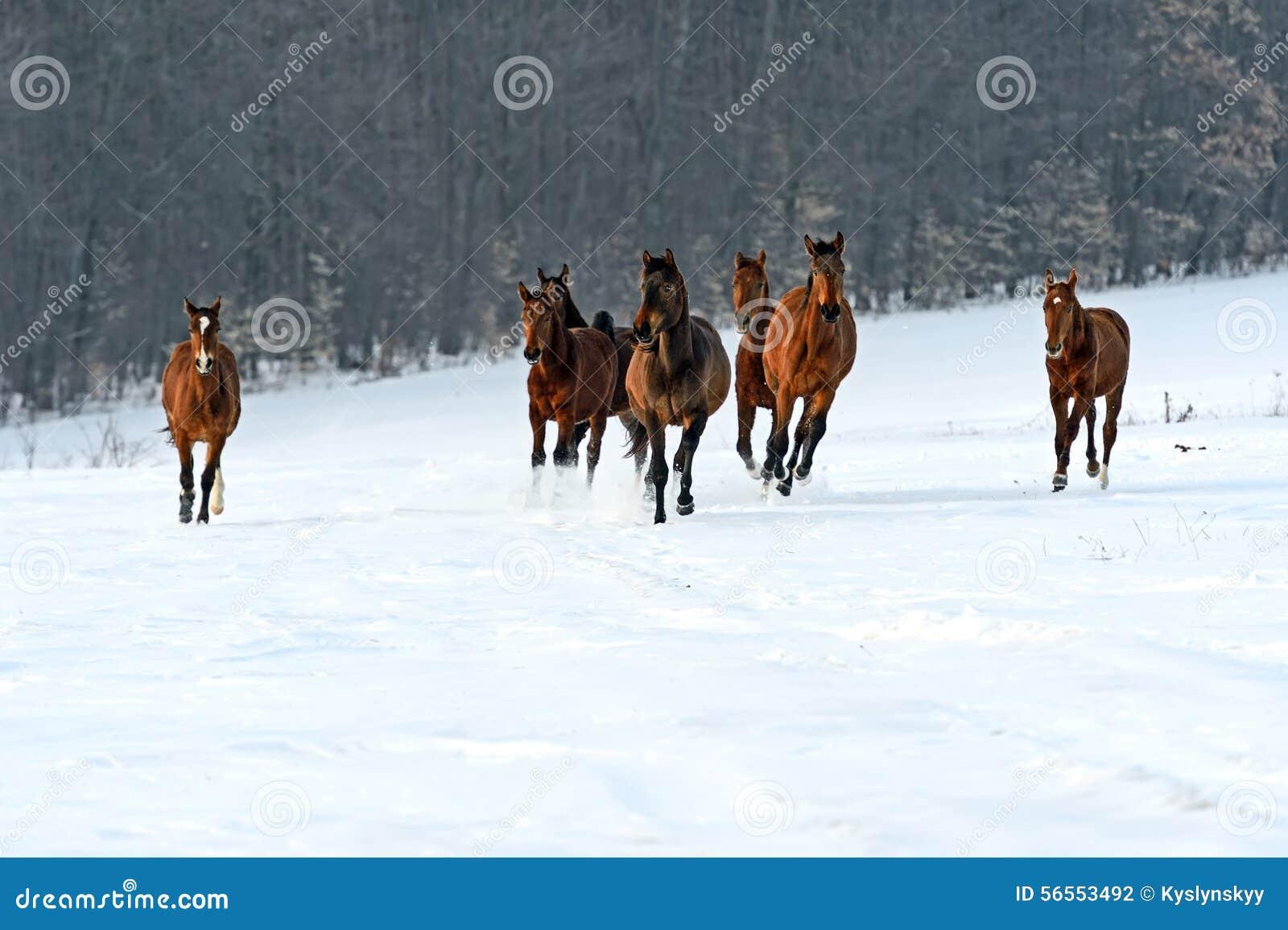 Download Άλογο στοκ εικόνες. εικόνα από wildlife, αγρόκτημα, πλανήτης - 56553492