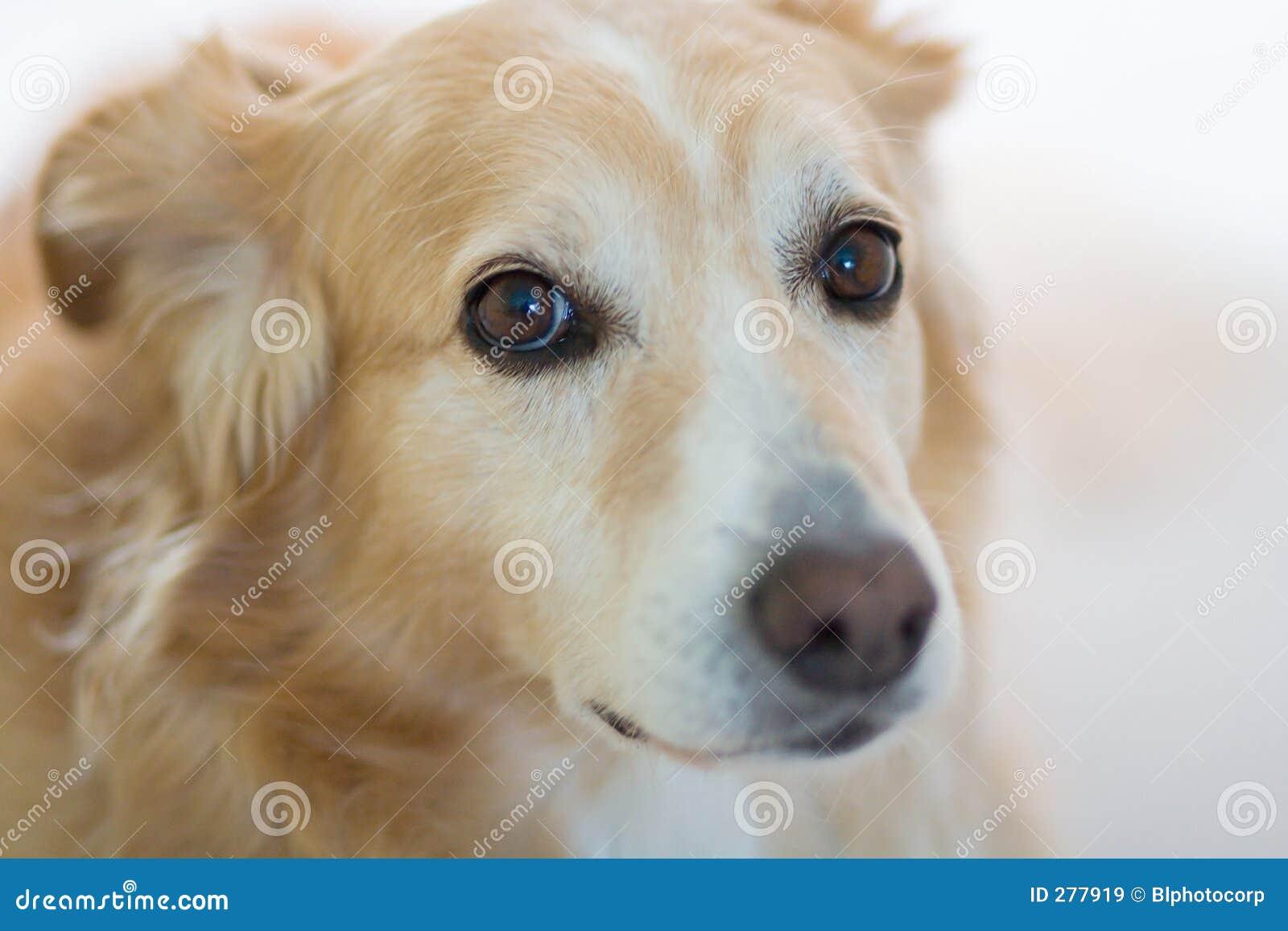 έκφραση σκυλιών λυπημένη