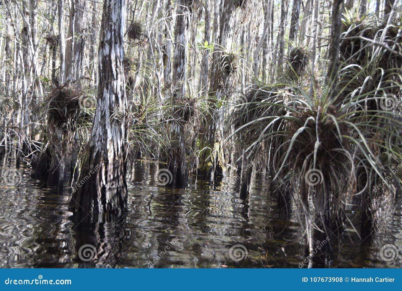 Έλος στο Everglades με τις εγκαταστάσεις αέρα