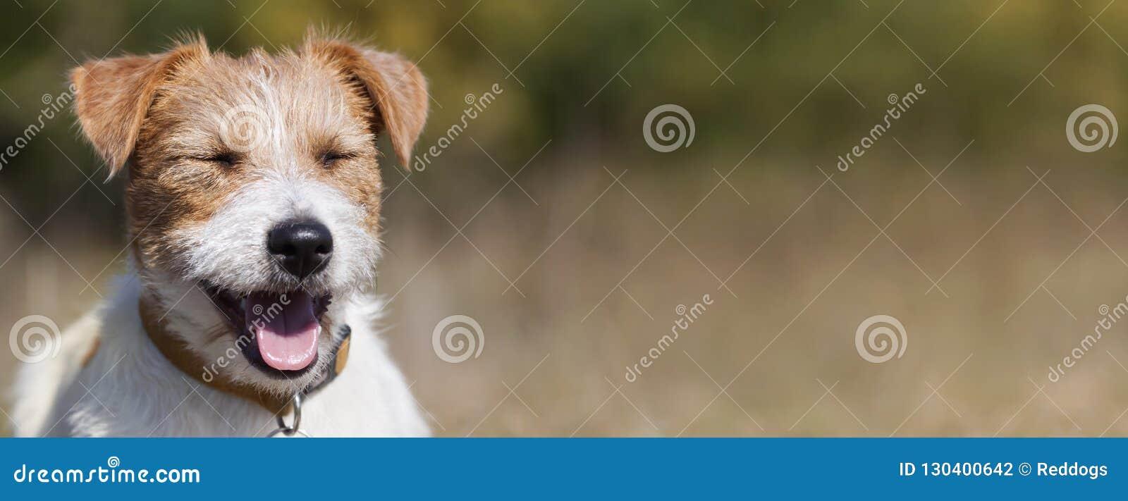 Έμβλημα Ιστού ενός ευτυχούς κουταβιού σκυλιών κατοικίδιων ζώων χαμόγελου