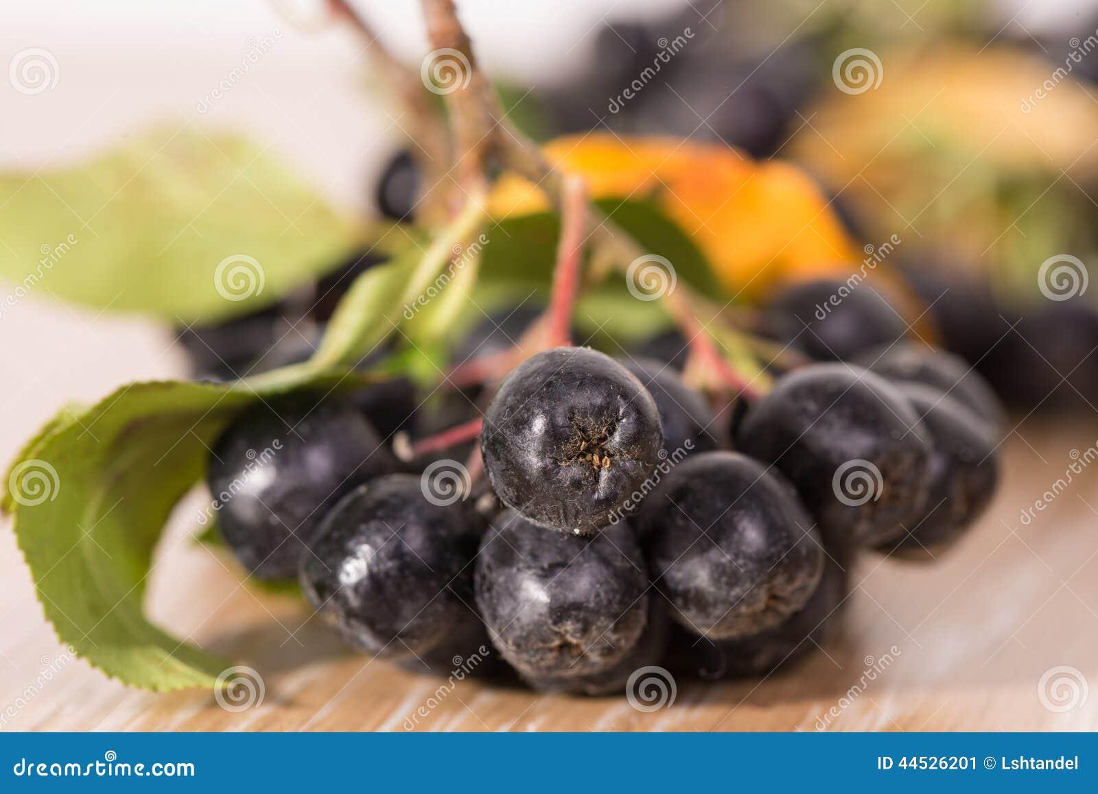 Έμφραξη-μούρο (aronia) - κλάδος με τα μούρα