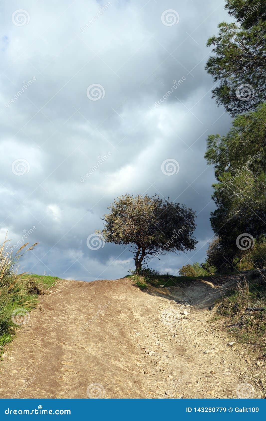 Ένας βρώμικος δρόμος καταλήγει με ένα δέντρο στην απόσταση