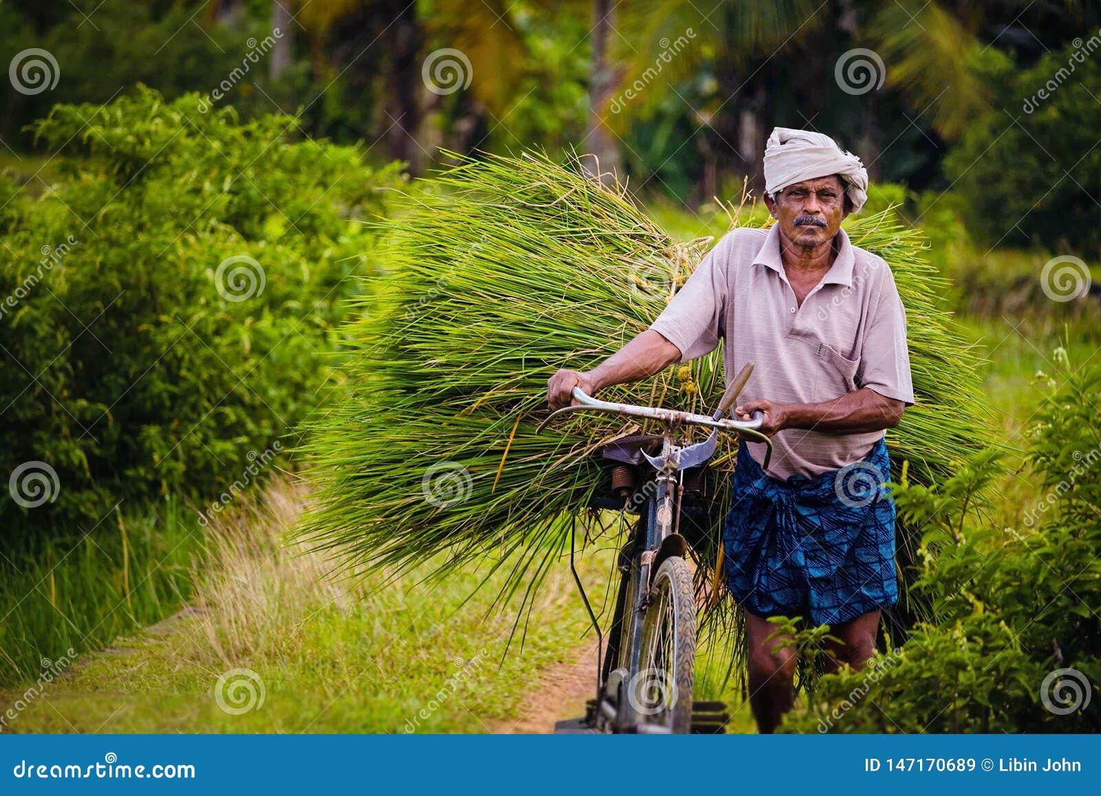 Ένας ηληκιωμένος που μεταφέρει τις συγκομισμένες εγκαταστάσεις ρυζιού στο Κεράλα