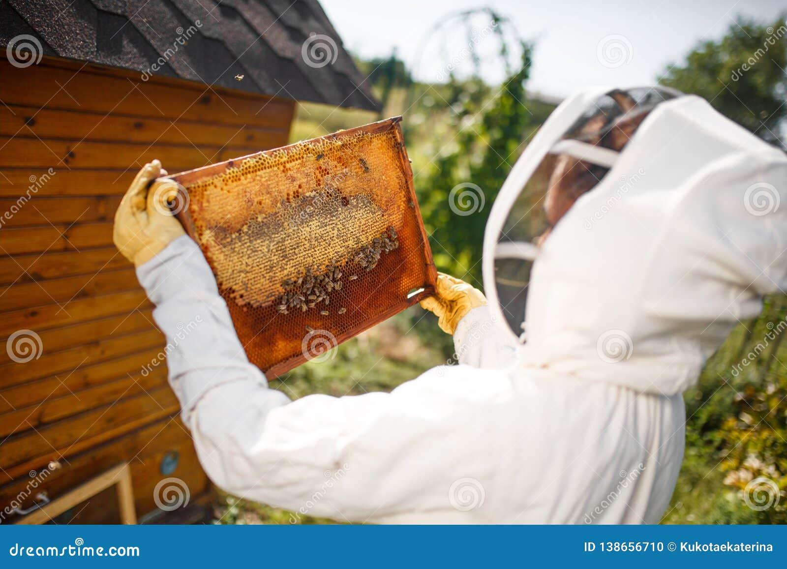 Ένας νέος θηλυκός μελισσοκόμος σε ένα επαγγελματικό κοστούμι μελισσοκόμων, επιθεωρεί ένα ξύλινο πλαίσιο με τις κηρήθρες που κρατά