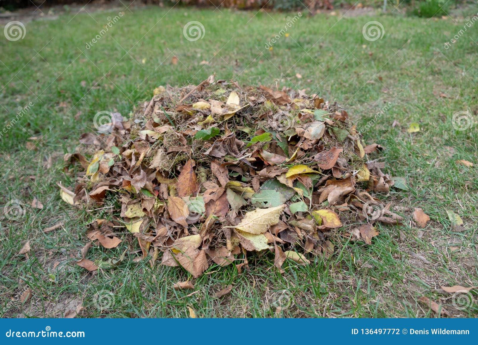 Ένας σωρός των φύλλων σκούπισε μαζί με μια τσουγκράνα σε ένα λιβάδι στον κήπο τα φύλλα πηγαίνουν σε έναν κάδο