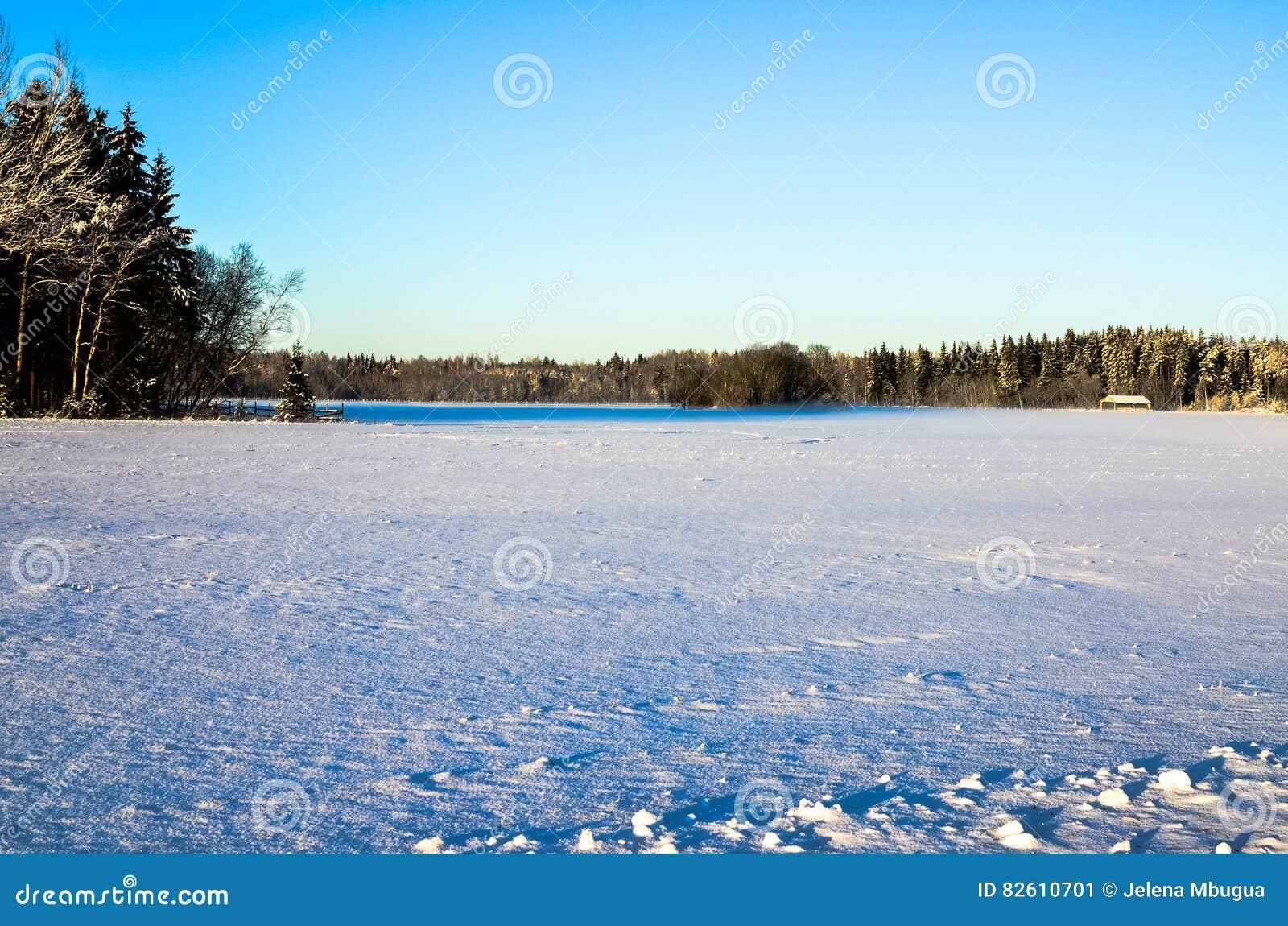 Ένας χιονώδης τομέας με ένα δασικό τοπίο