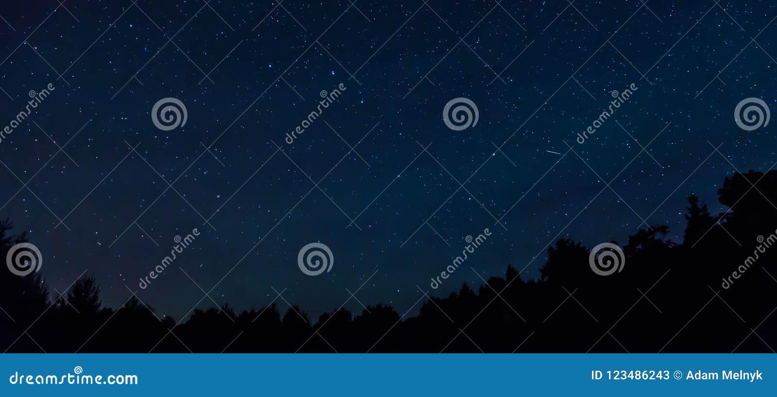 Έναστρος νυχτερινός ουρανός με ένα αστέρι πυροβολισμού και ένα treeline στο πρώτο πλάνο