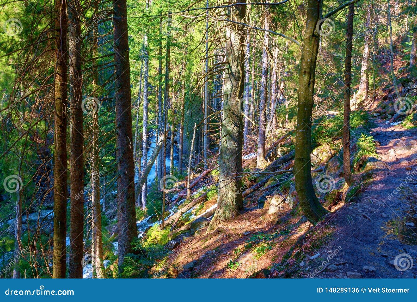 Ένα άγριο ρεύμα διασχίζει το βαυαρικό δάσος