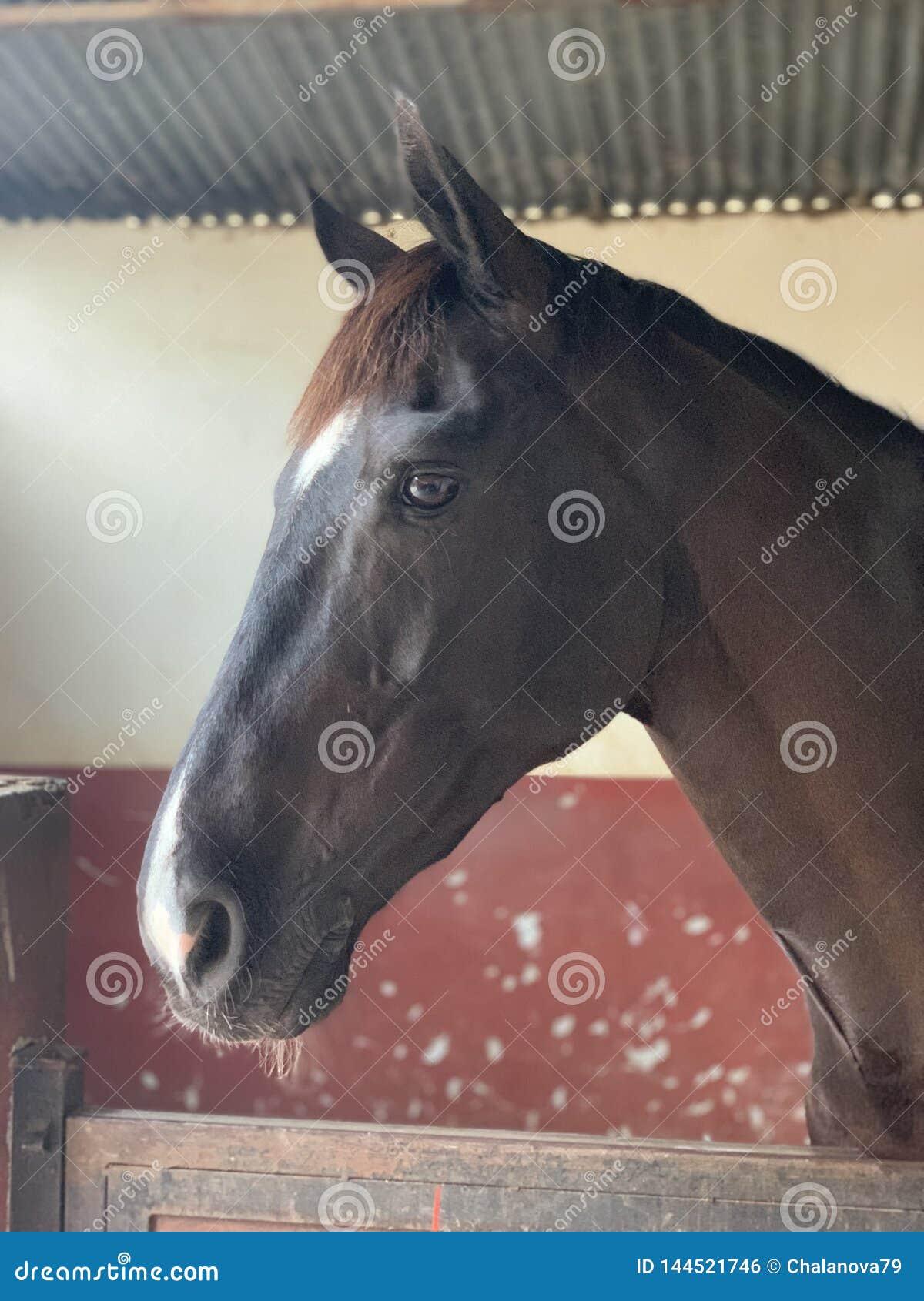 Ένα άλογο με τα όμορφα μάτια που στέκονται στο σταύλο r