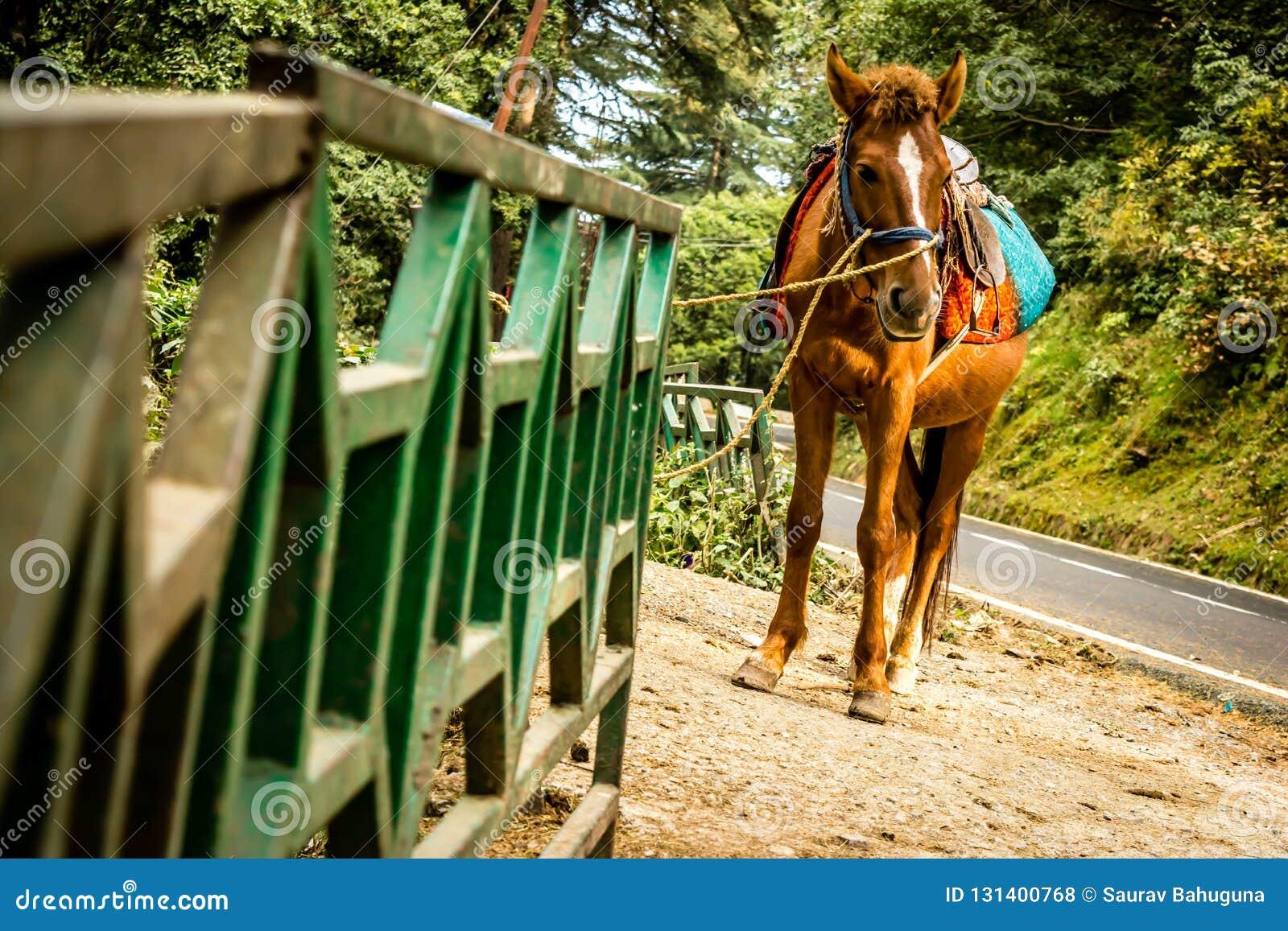 Ένα άλογο που φέρνει ένα κάθισμα στην πλάτη του και δεμένος σε ένα κιγκλίδωμα σιδήρου σε μια άκρη του δρόμου