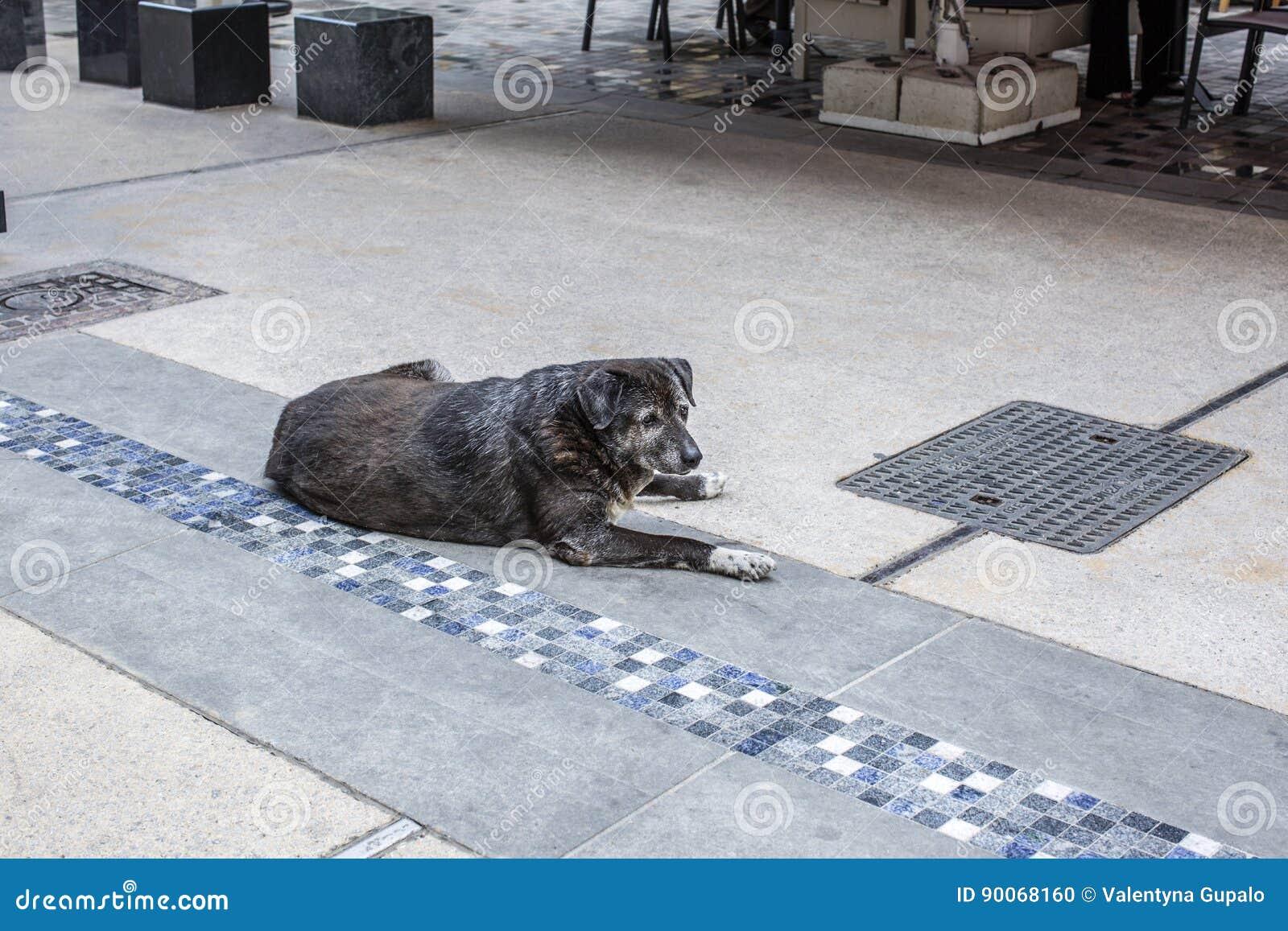 Ένα άστεγο λυπημένο γκρίζο αντιμέτωπο σκυλί βρίσκεται στην οδό Θεσσαλονίκης