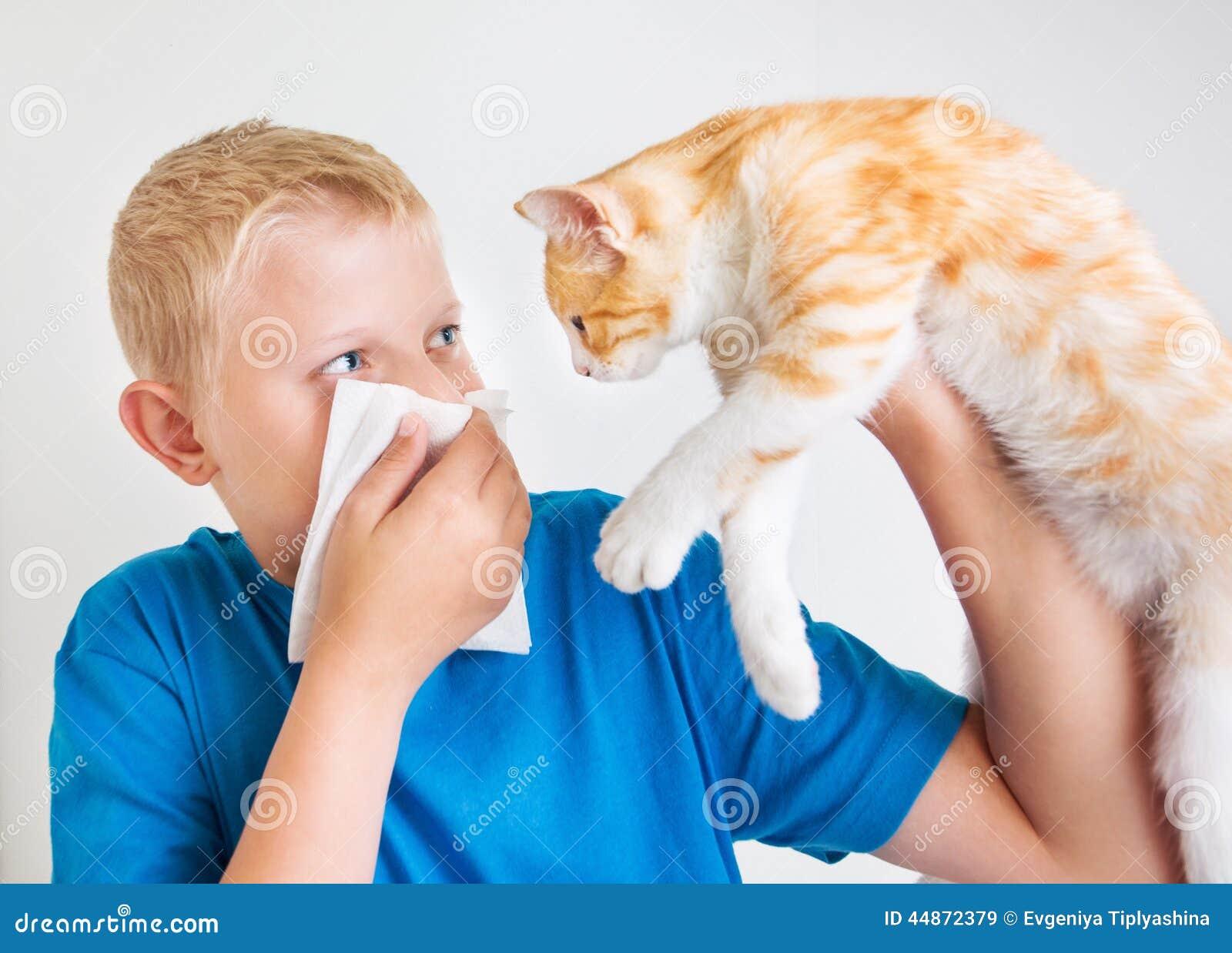 Ένα αγόρι με την αλλεργία γατών