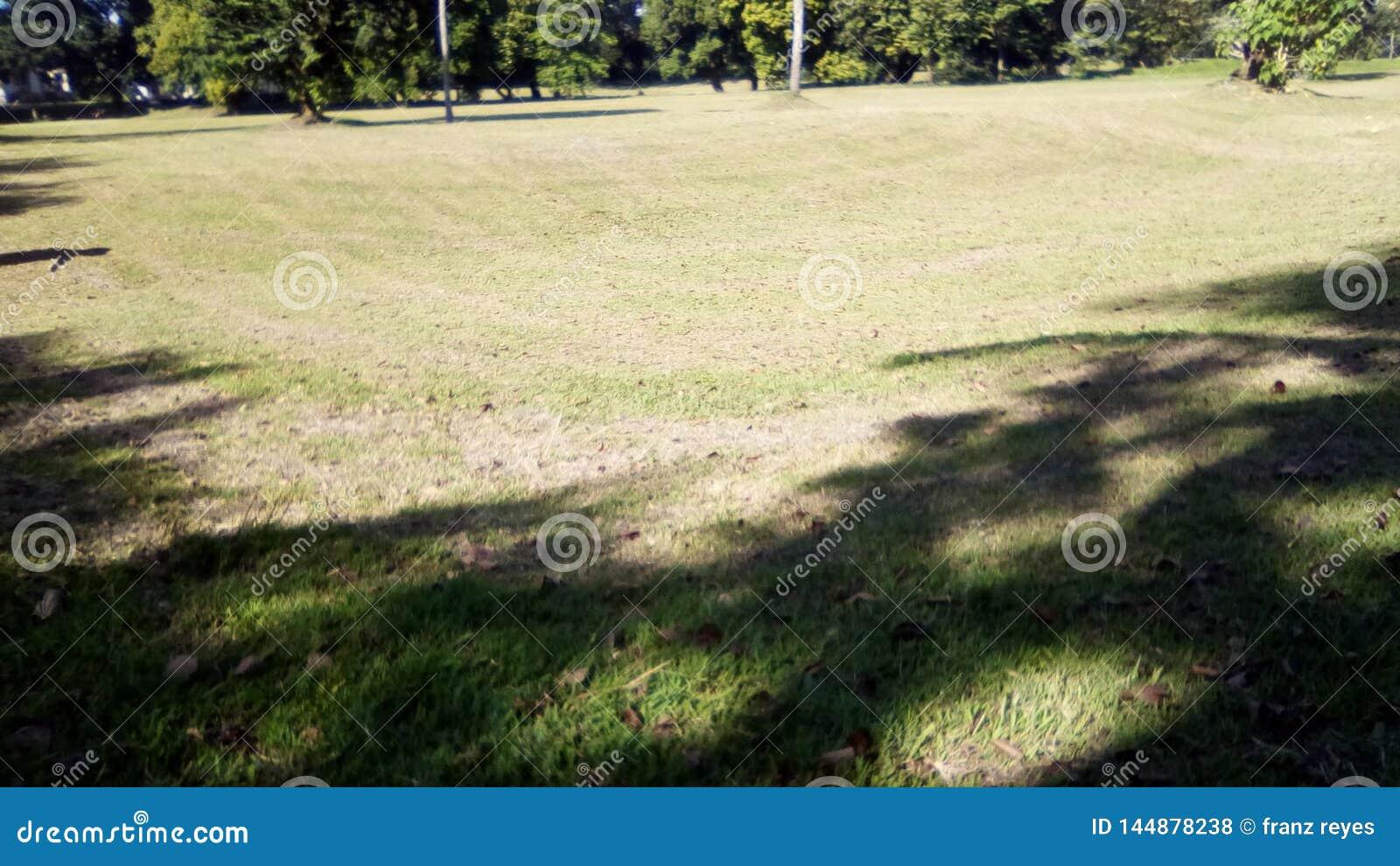 Ένα γήπεδο του γκολφ ή ένα θερινό τοπίο τομέων