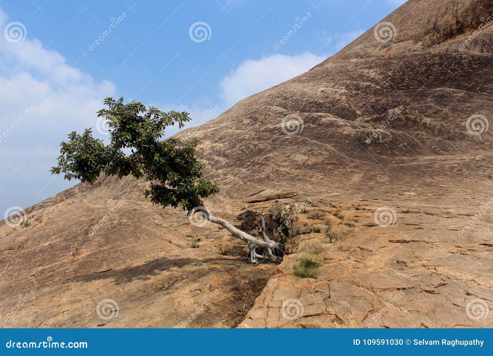 Ένα δέντρο με το βράχο λόφων με τον ουρανό του sittanavasal ναού σπηλιών σύνθετου