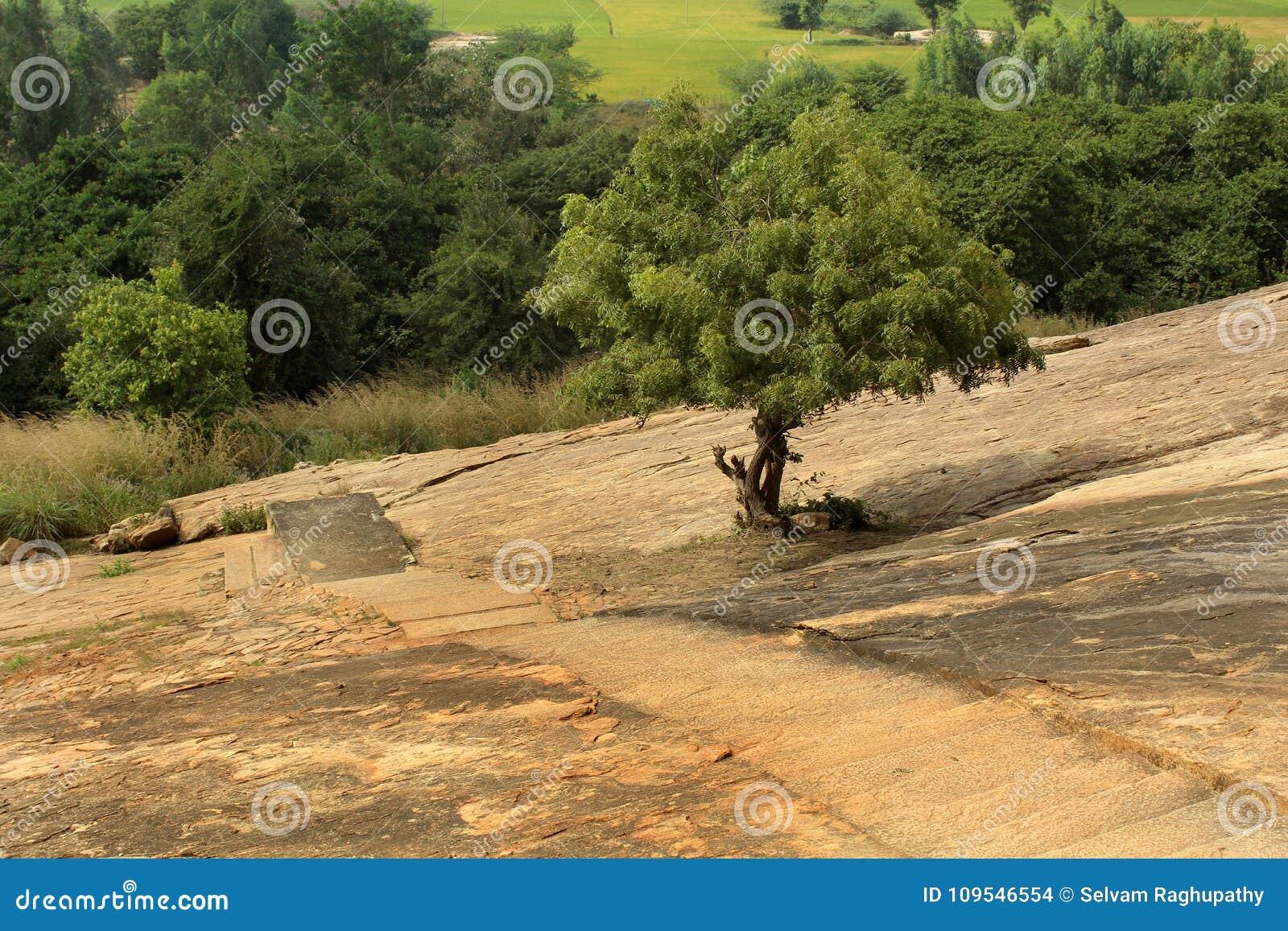 Ένα δέντρο με το βράχο λόφων του sittanavasal ναού σπηλιών σύνθετου