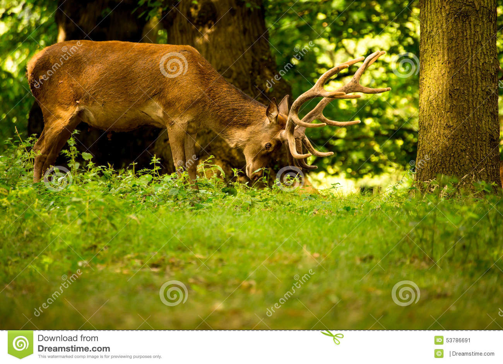 Ένα ελάφι ταΐζει στο δάσος