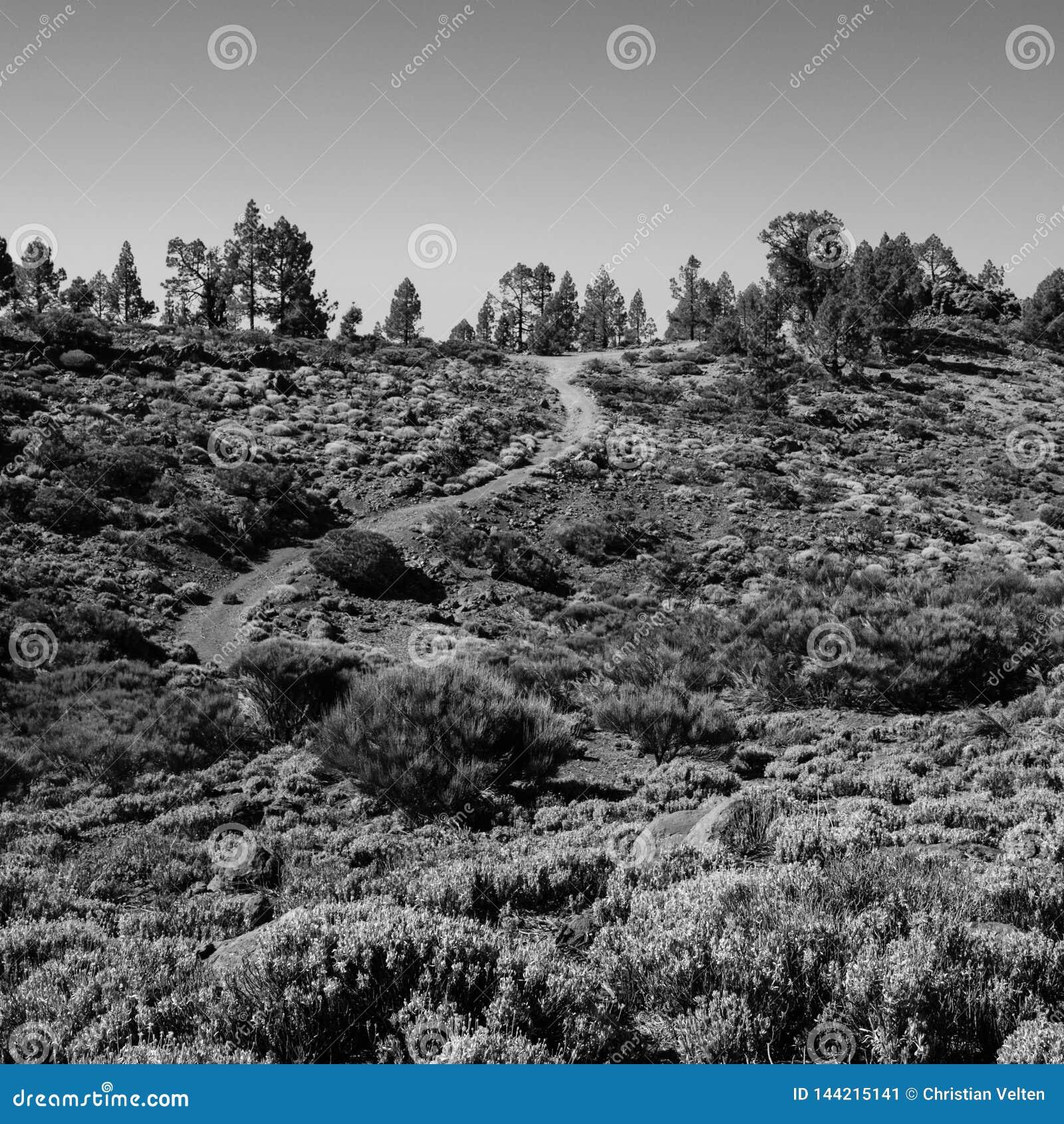 Ένα κατσαρωμένο ίχνος μέσω της αγριότητας Teide υποστηριγμάτων