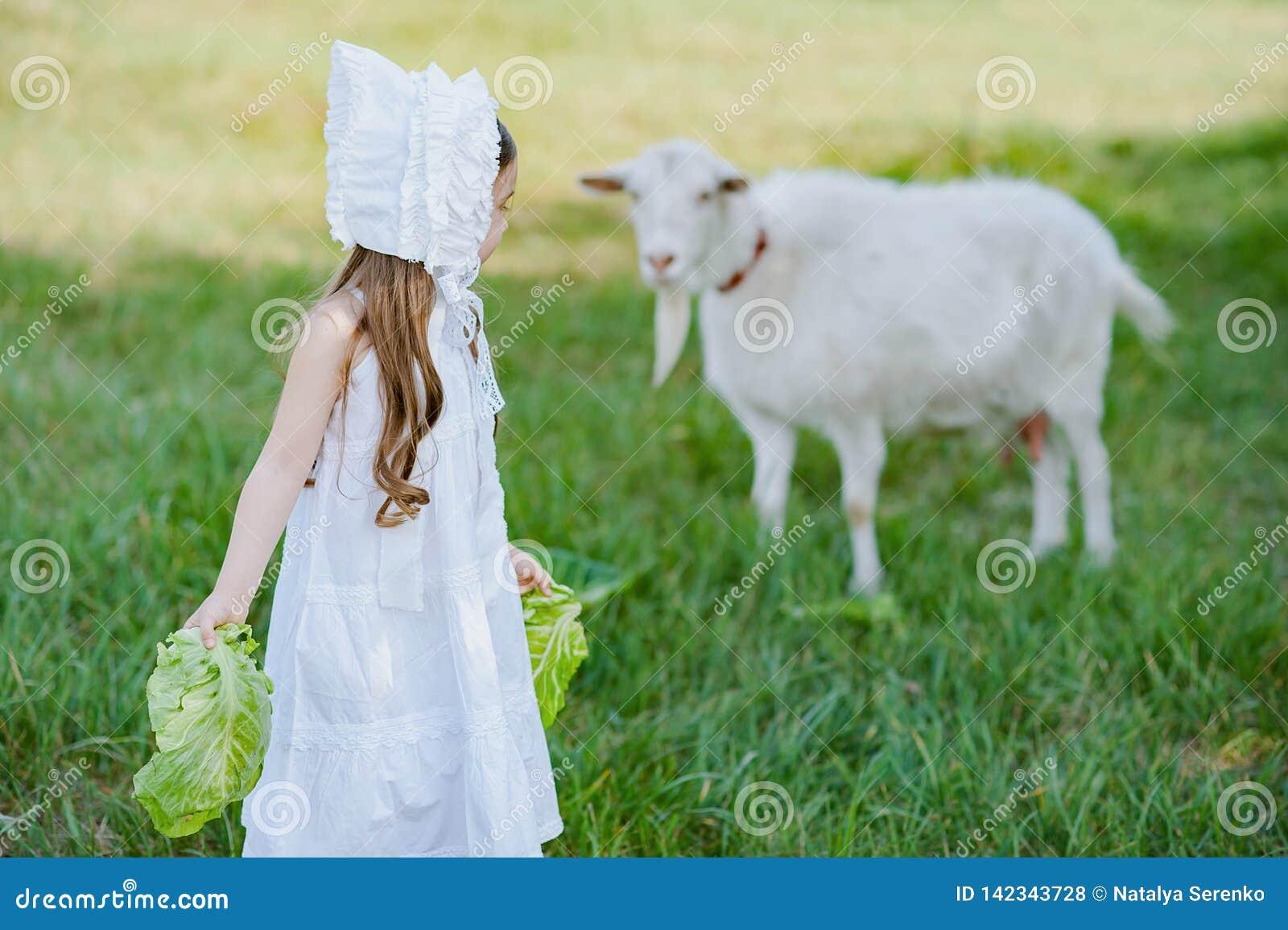 Ένα κορίτσι ποιμένων σε ένα άσπρα φόρεμα και ένα καπό ταΐζει μια αίγα με τα φύλλα λάχανων Τομέας αιγών σίτισης παιδιών την άνοιξη