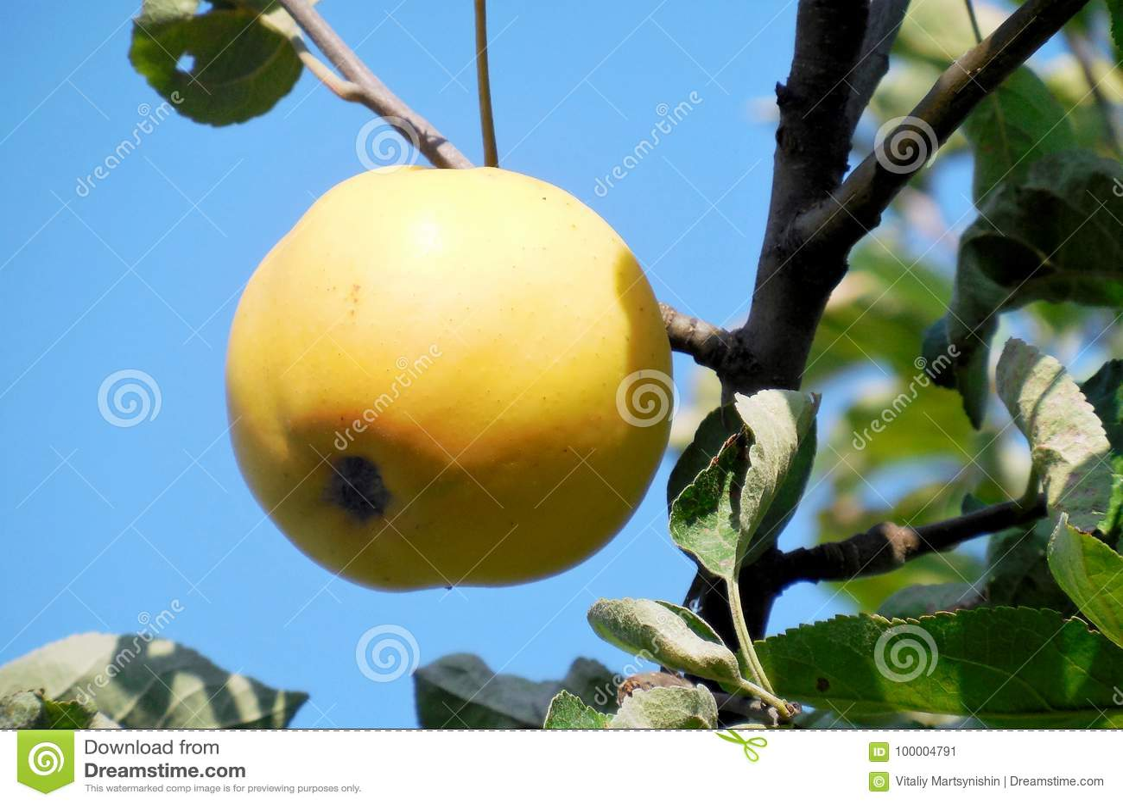 Ένα μήλο