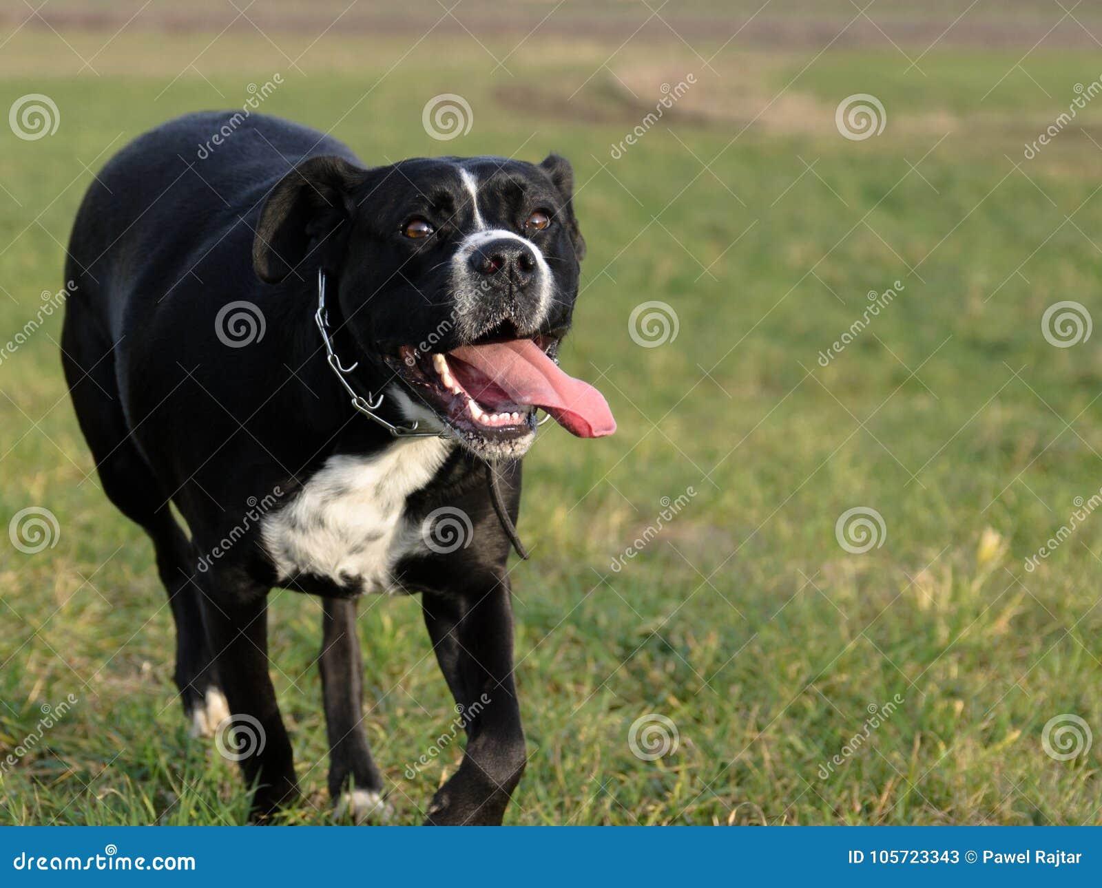 Μεγάλο μαύρο λεία κινητή πορνό