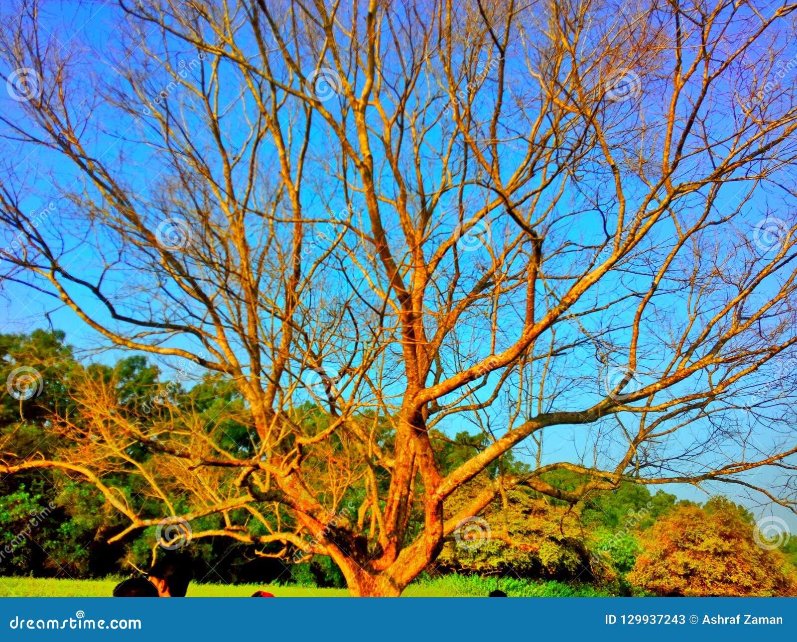 Ένα μόνο δέντρο
