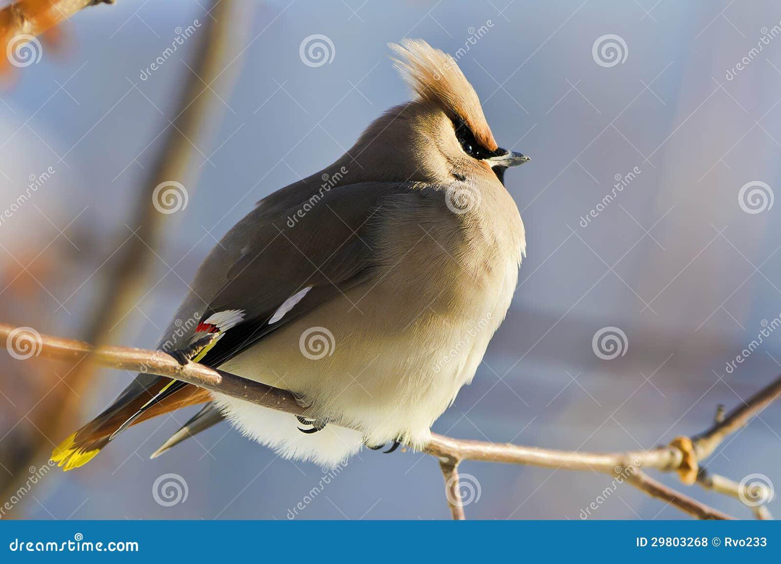 Μεγάλο πουλί κινητό πορνό