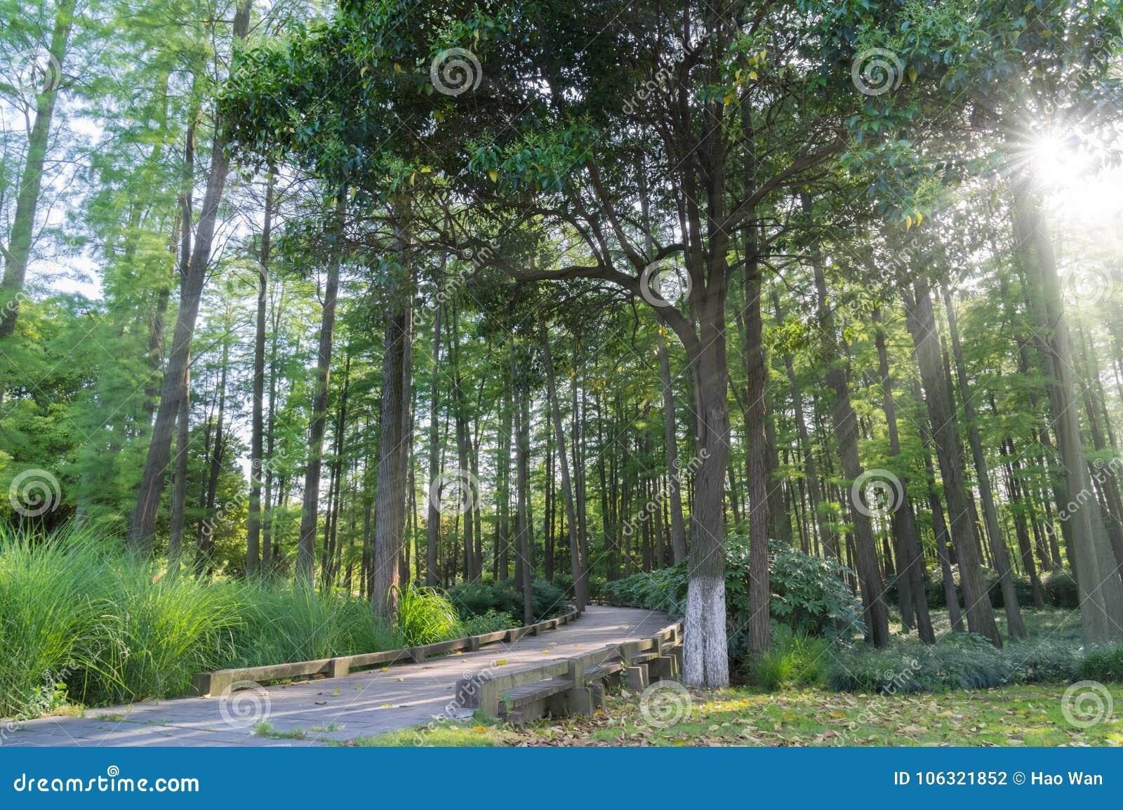 Ένα ξύλο στην Κίνα