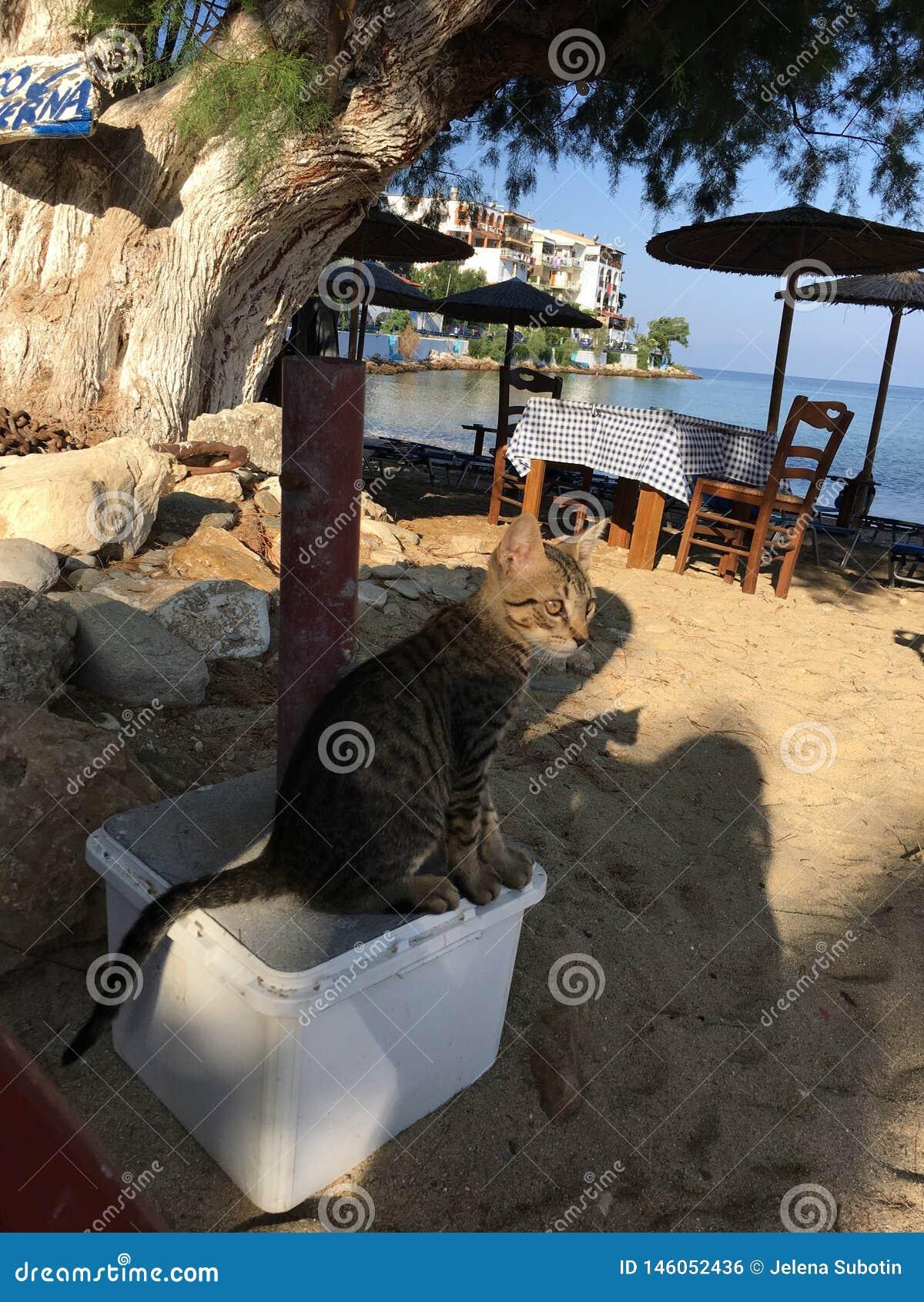 Ένα περίεργο βλέμμα στη γάτα στην ακτή