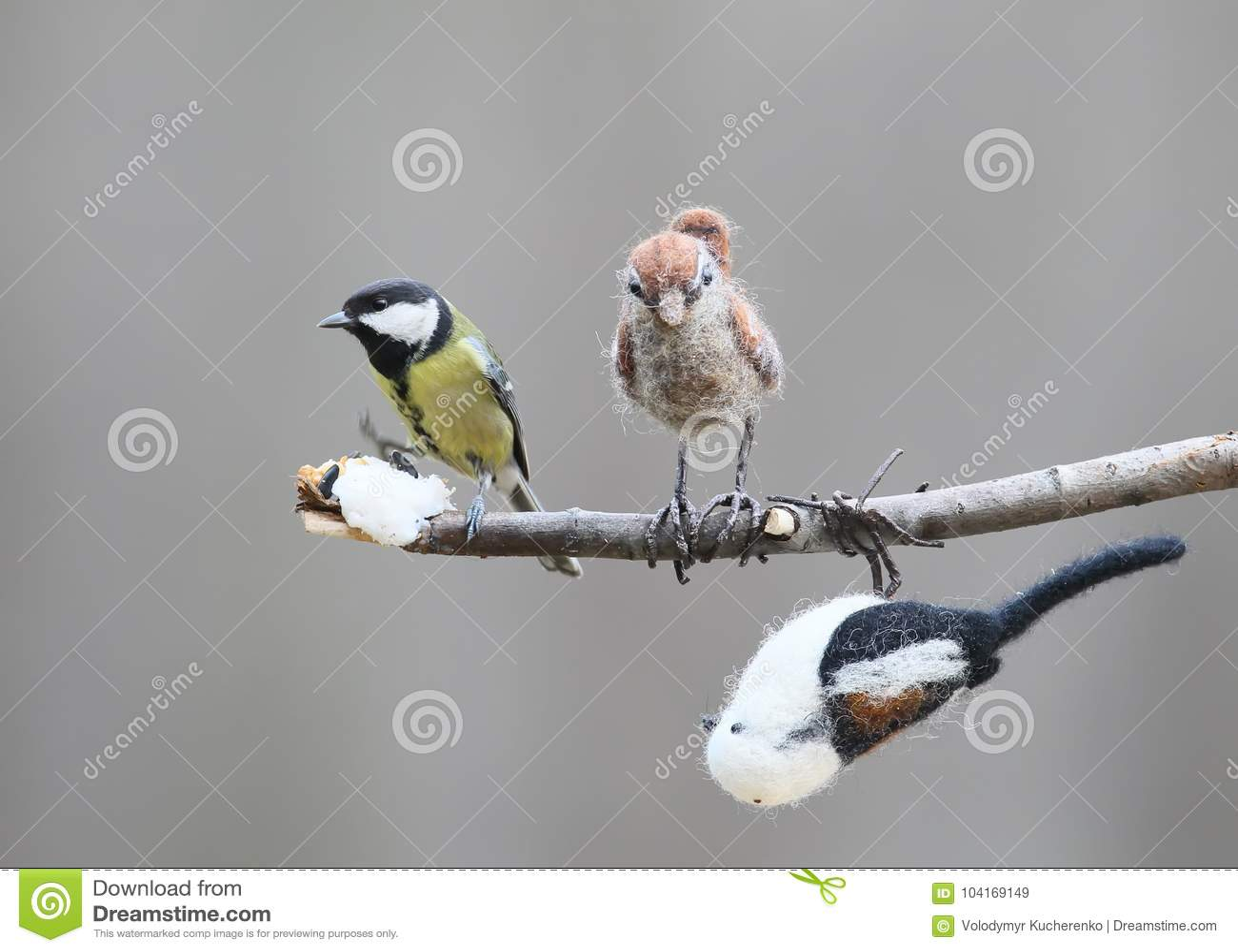 Πραγματικό μεγάλο πουλί εικόνες